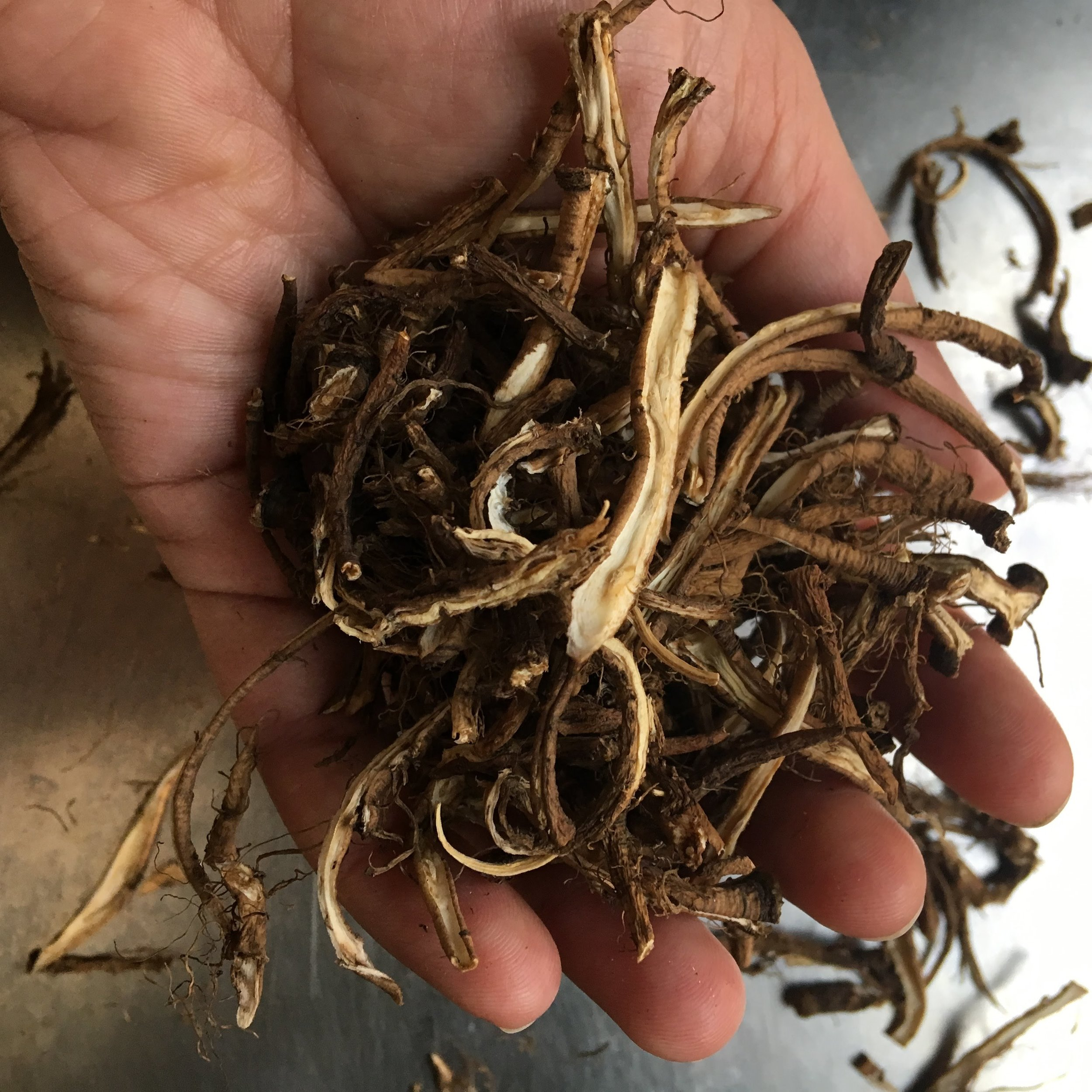 Dried dandelion root