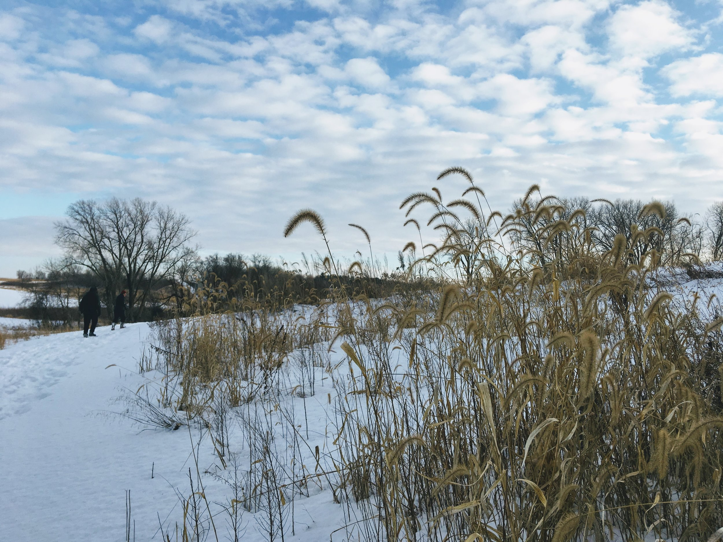 A typical winter landscape in Minnesota.