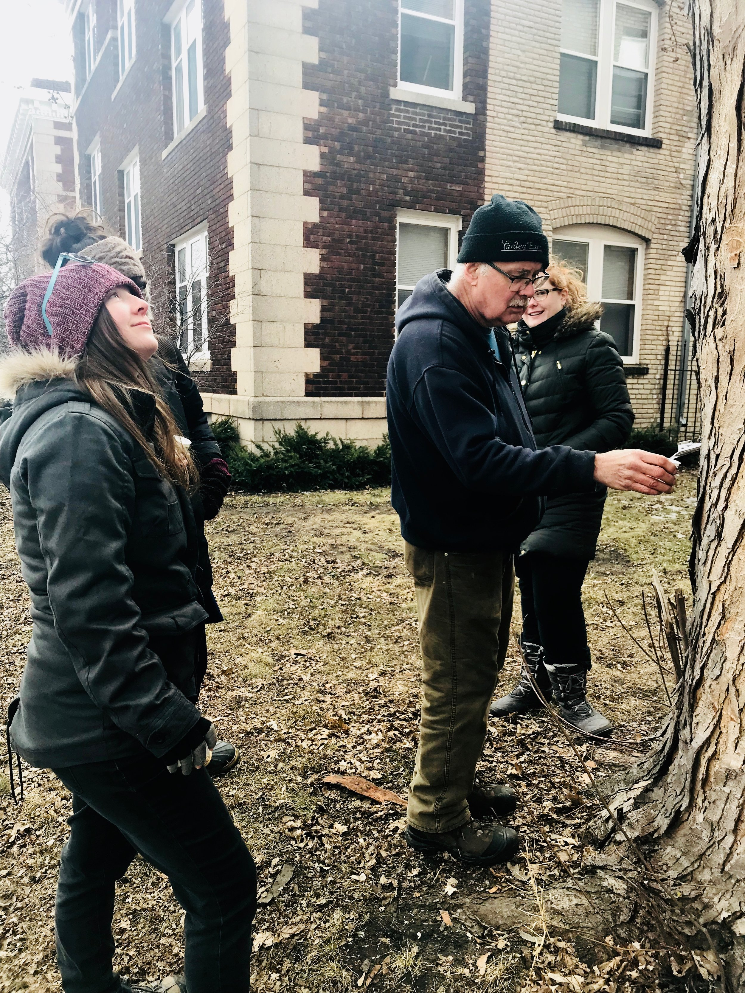 Tapping a silver maple in front of an apartment building.