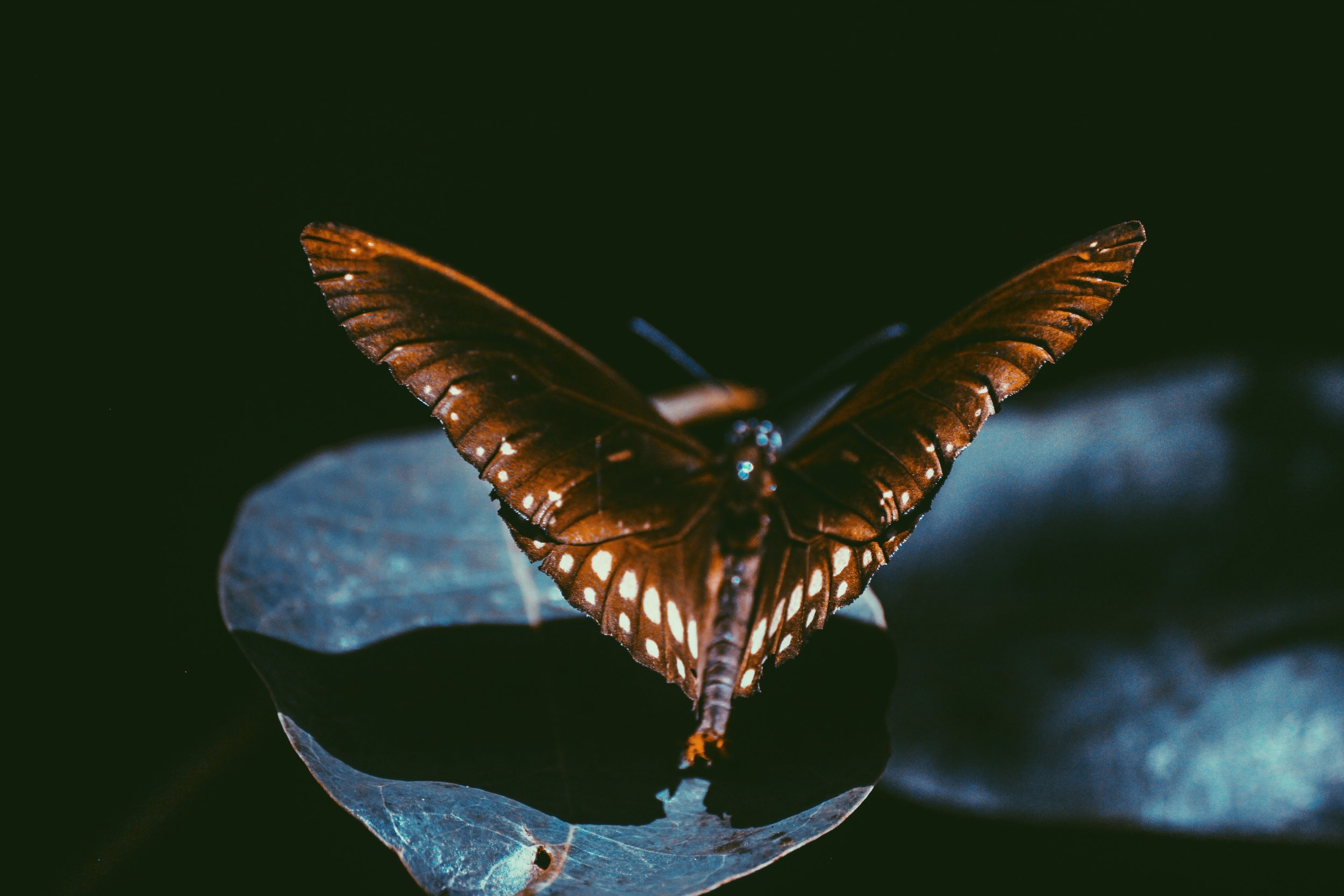butterfly-close-up-dark-1385761.jpg