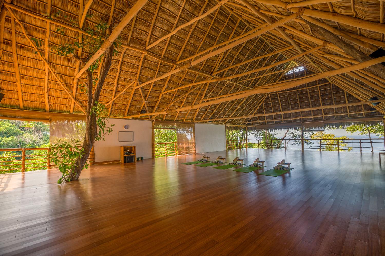 Jungle Studio
