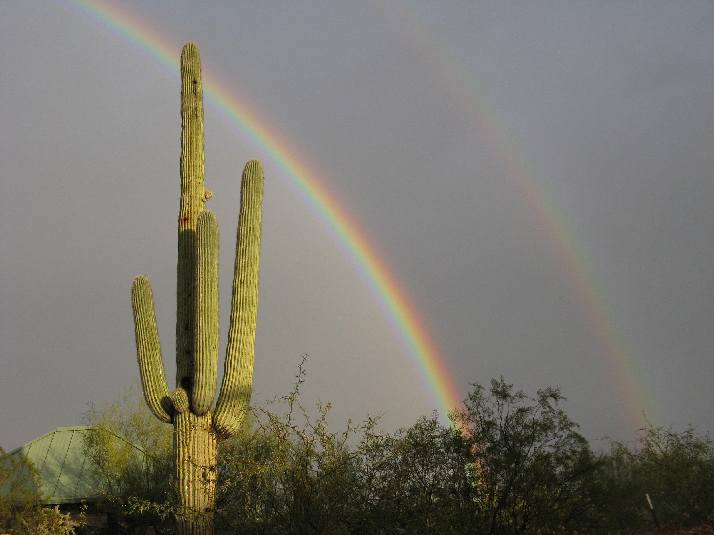 saguaro rainbow_0065.JPG