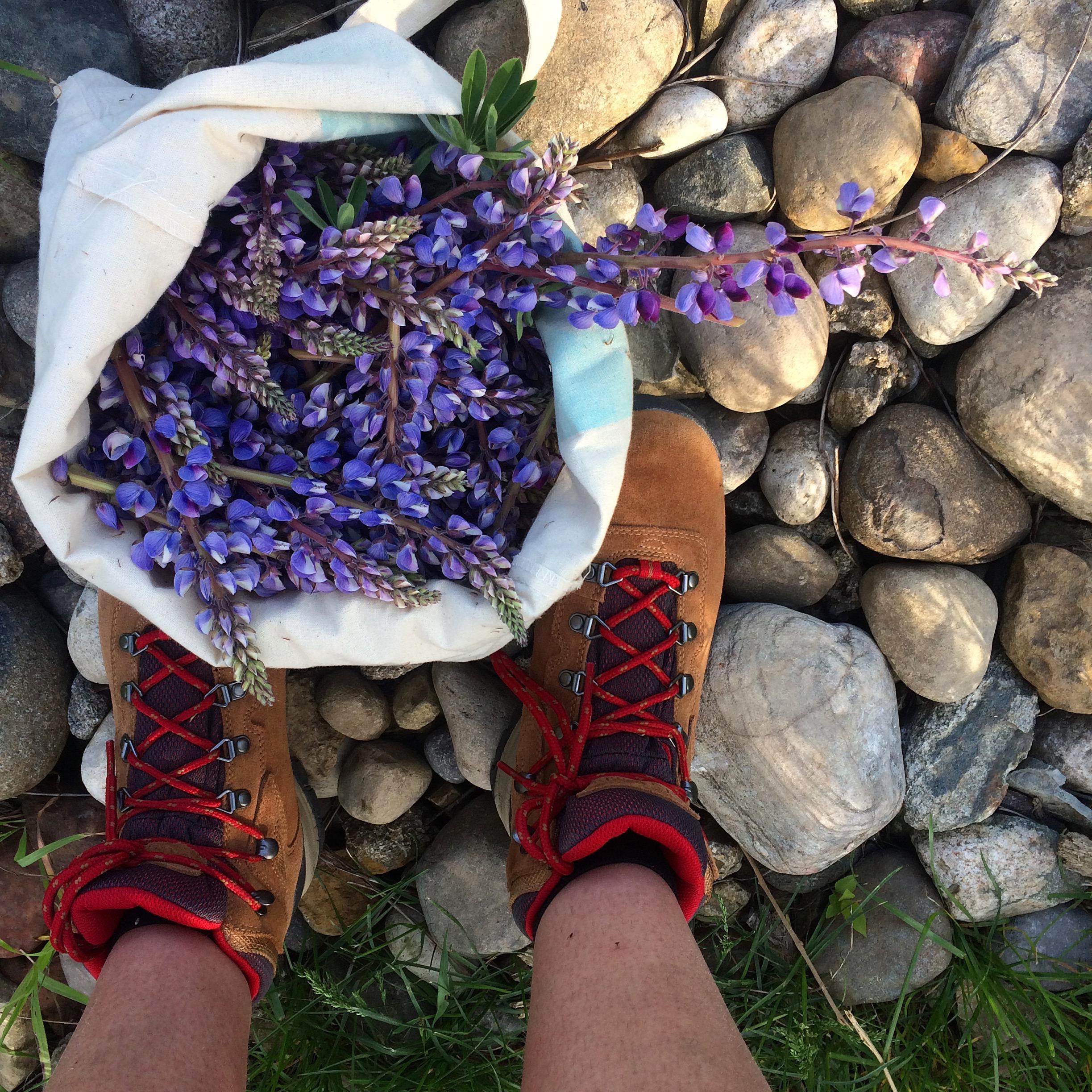 Lupine Harvest