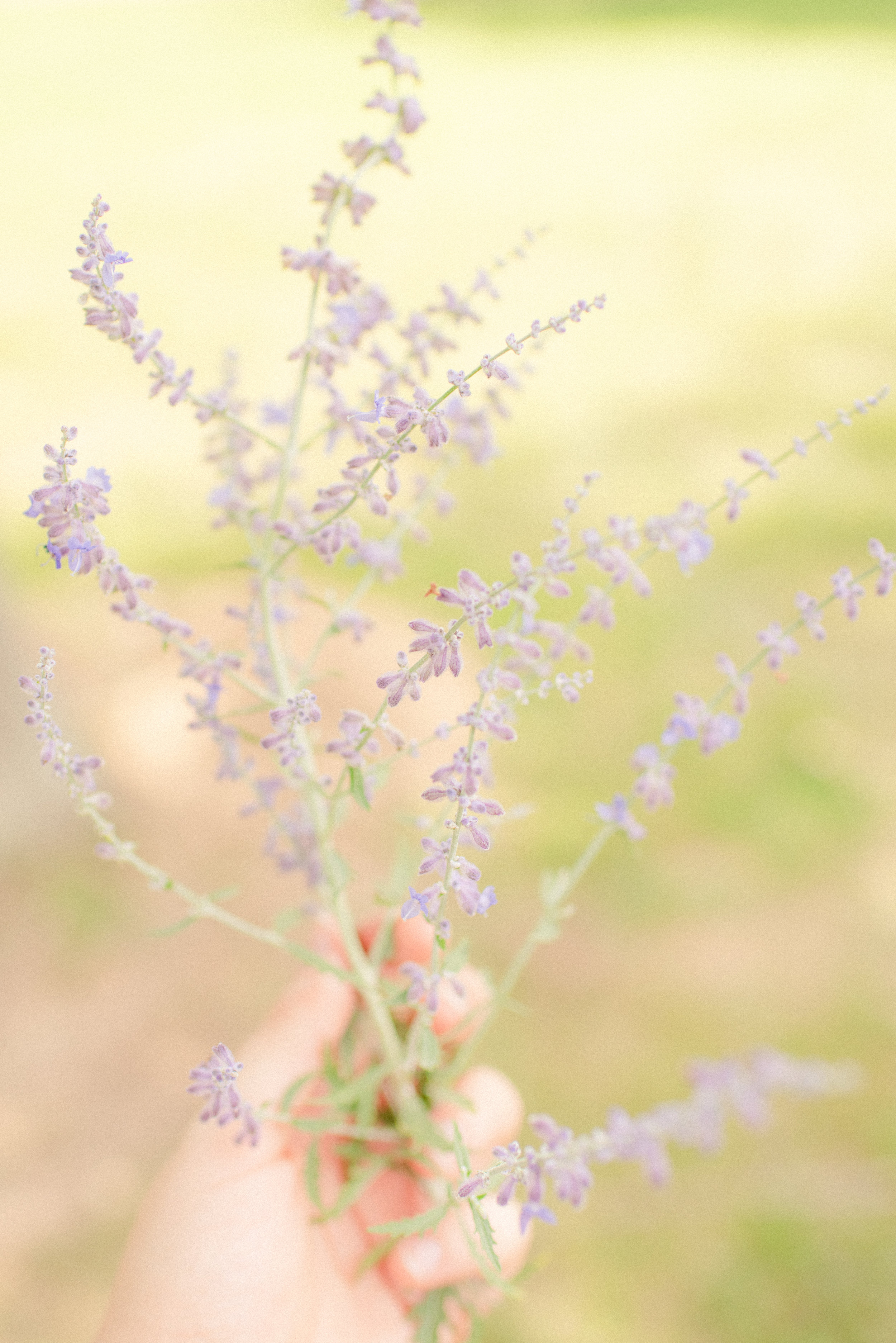 The Kuhn Wedding - July 2018  I'm not sure if I've shared this yet, but I love lavender. The smell of it, the structure of it, the color of it…I just love it. (I may or may not have stolen this small bit of a bush of it that I found at this particular wedding's venue.)