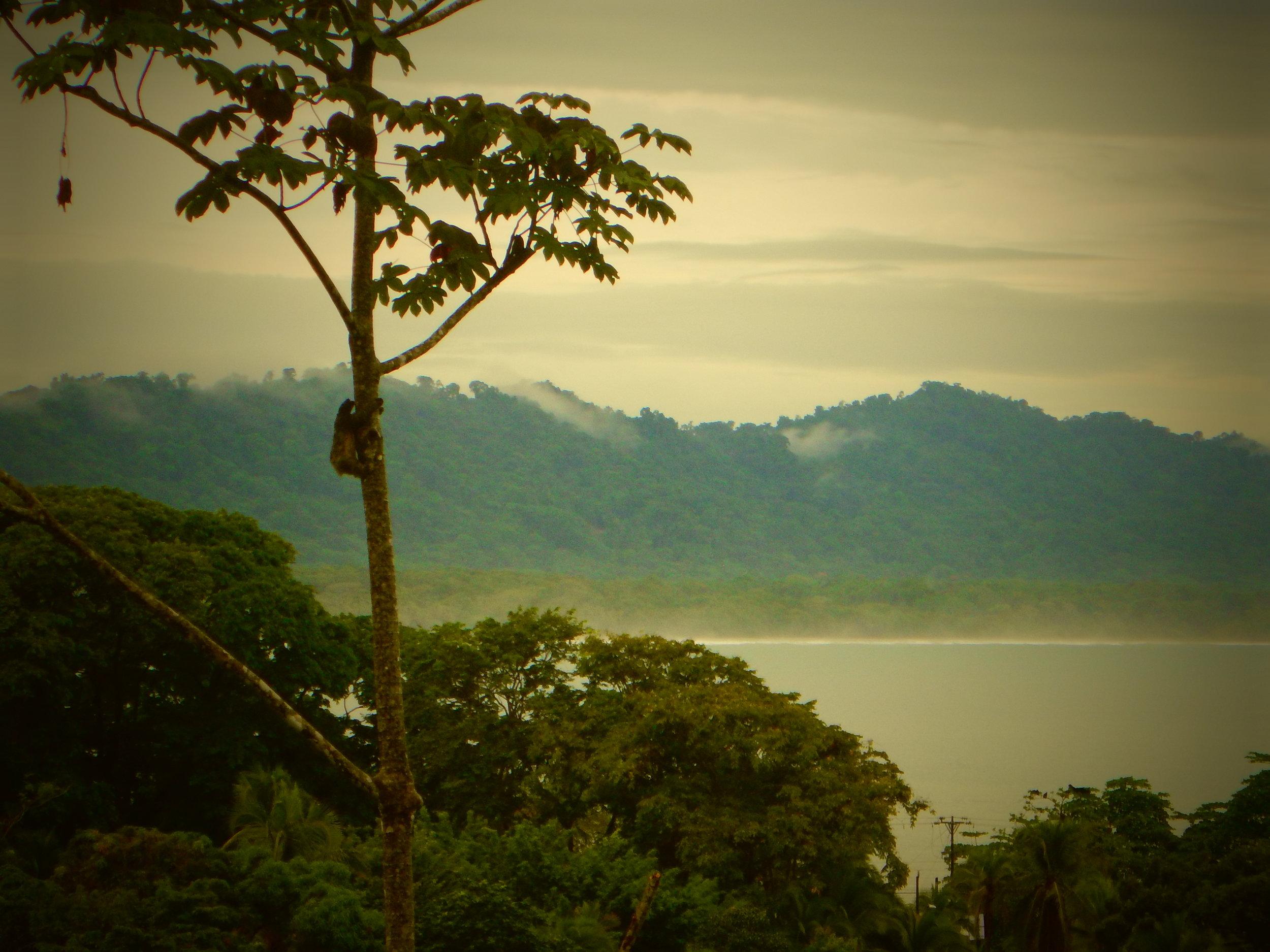 Maha shala Views Spot the Sloth.JPG