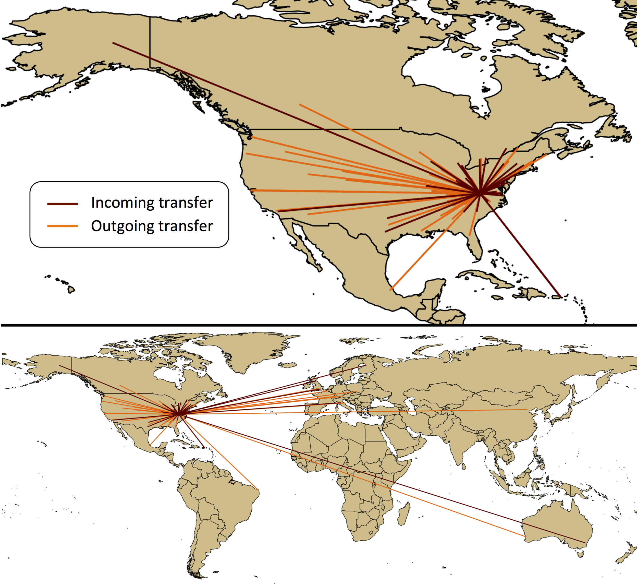 Figure legend: Transfers of specimens to the Massey Herbarium (maroon lines) and from the Massey Herbarium (orange lines) are shown. The top image shows a closer detail of transfers within North America. The bottom image shows global transfers. The lines are unweighted, so a single line can represent from 1 to 14 transfers.