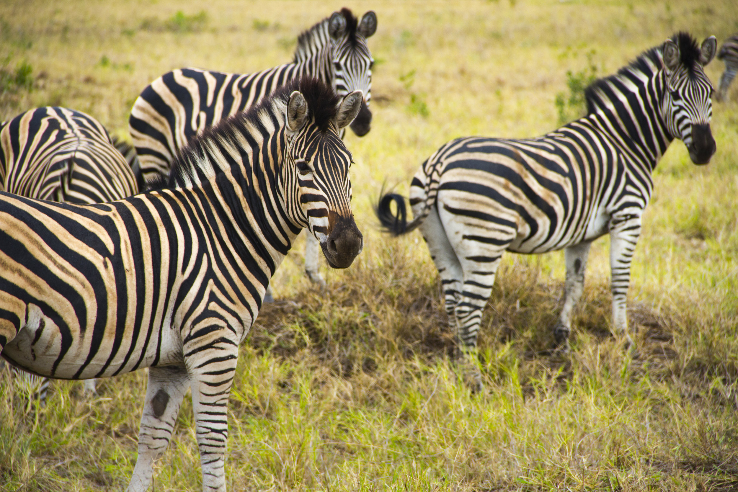 SouthAfrica_sm-3786.jpg