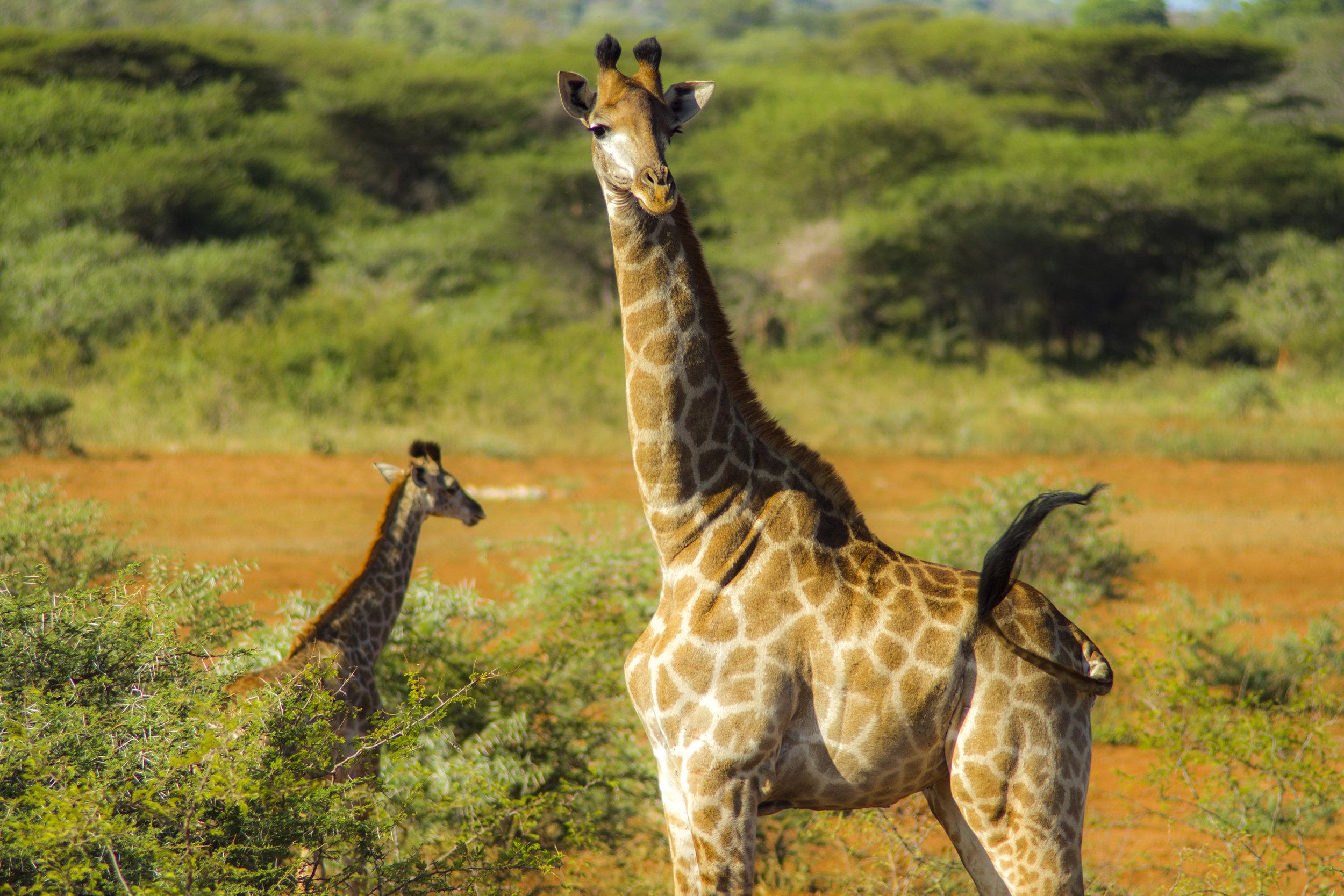 SouthAfrica_sm-4113.jpg