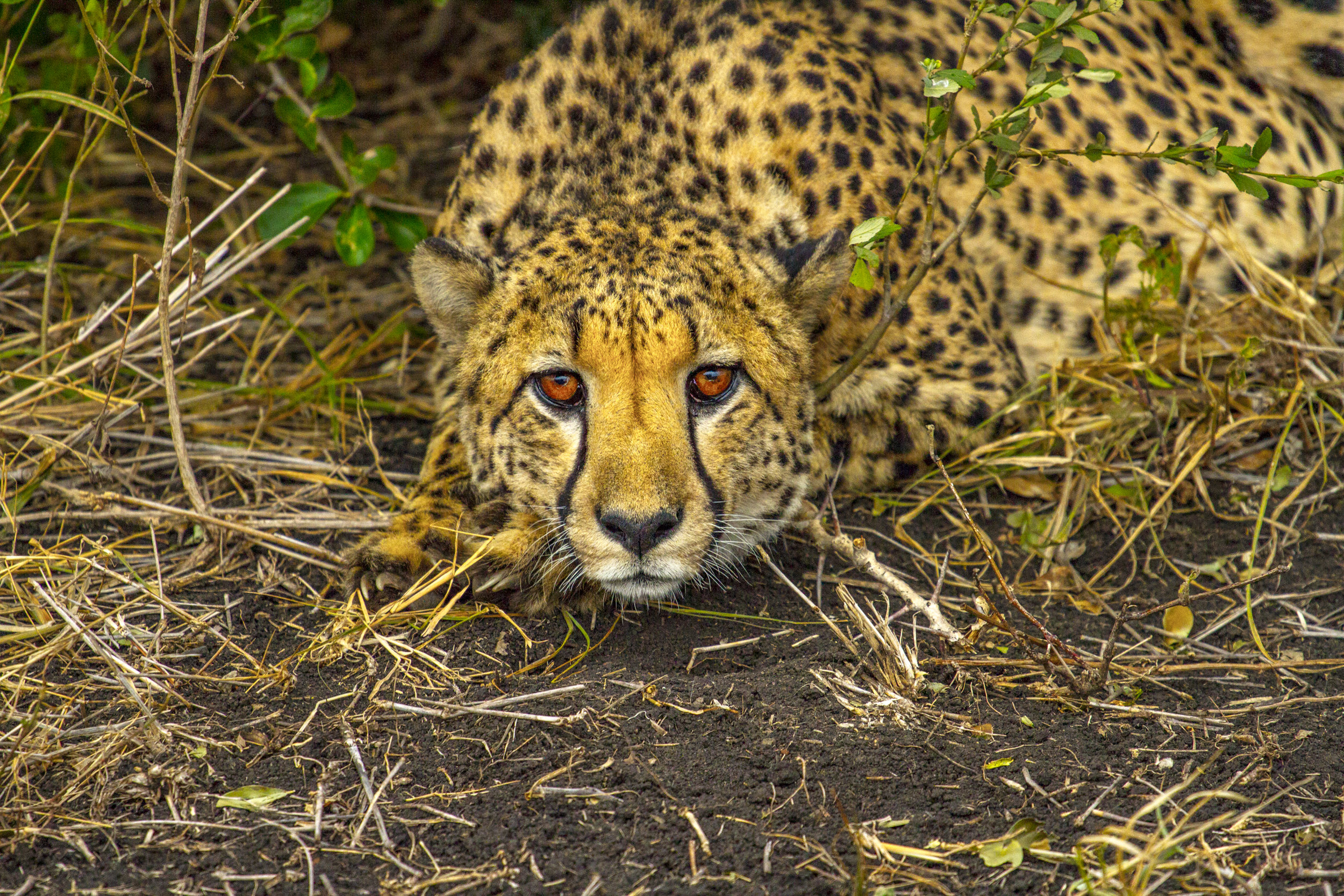 SouthAfrica_sm-4786.jpg
