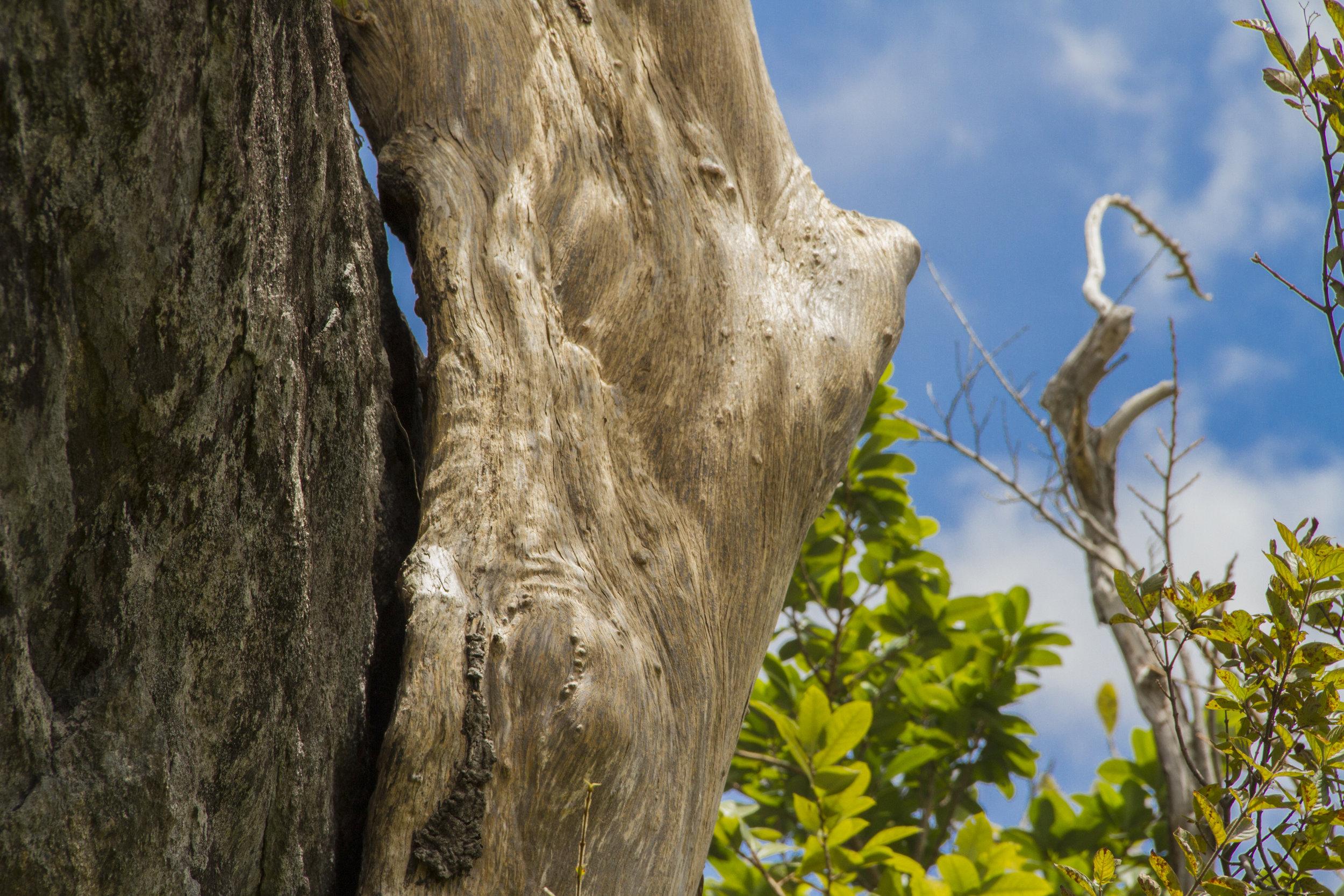 Guyana_sm-0126.jpg