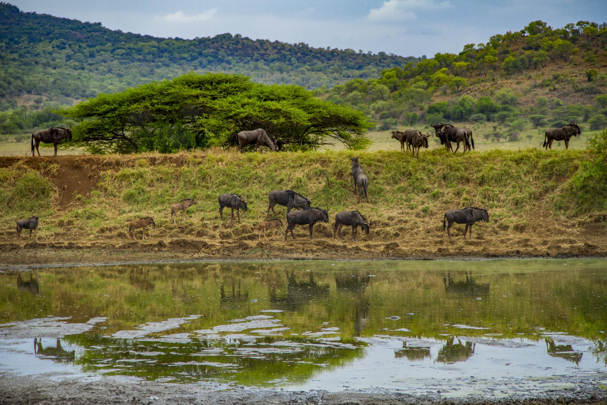SouthAfrica_sm-3532.jpg