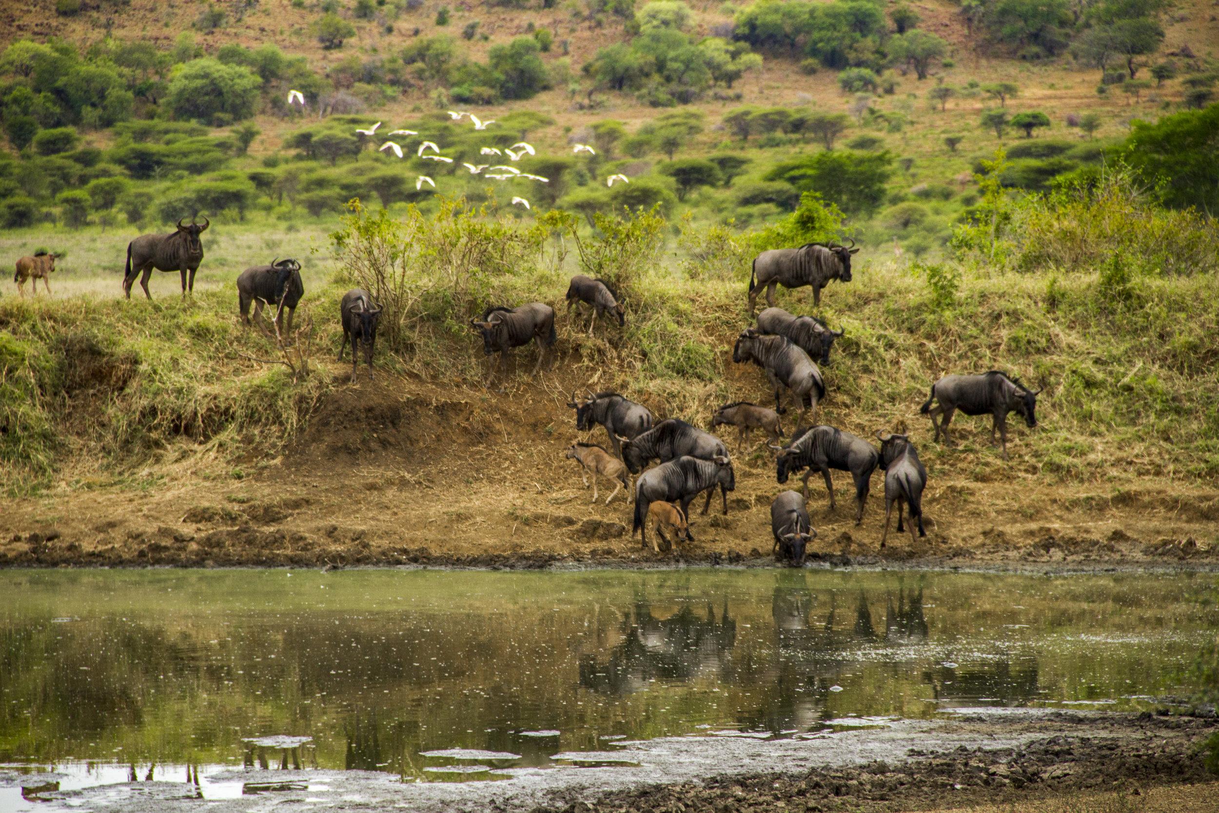 SouthAfrica_sm-3572.jpg