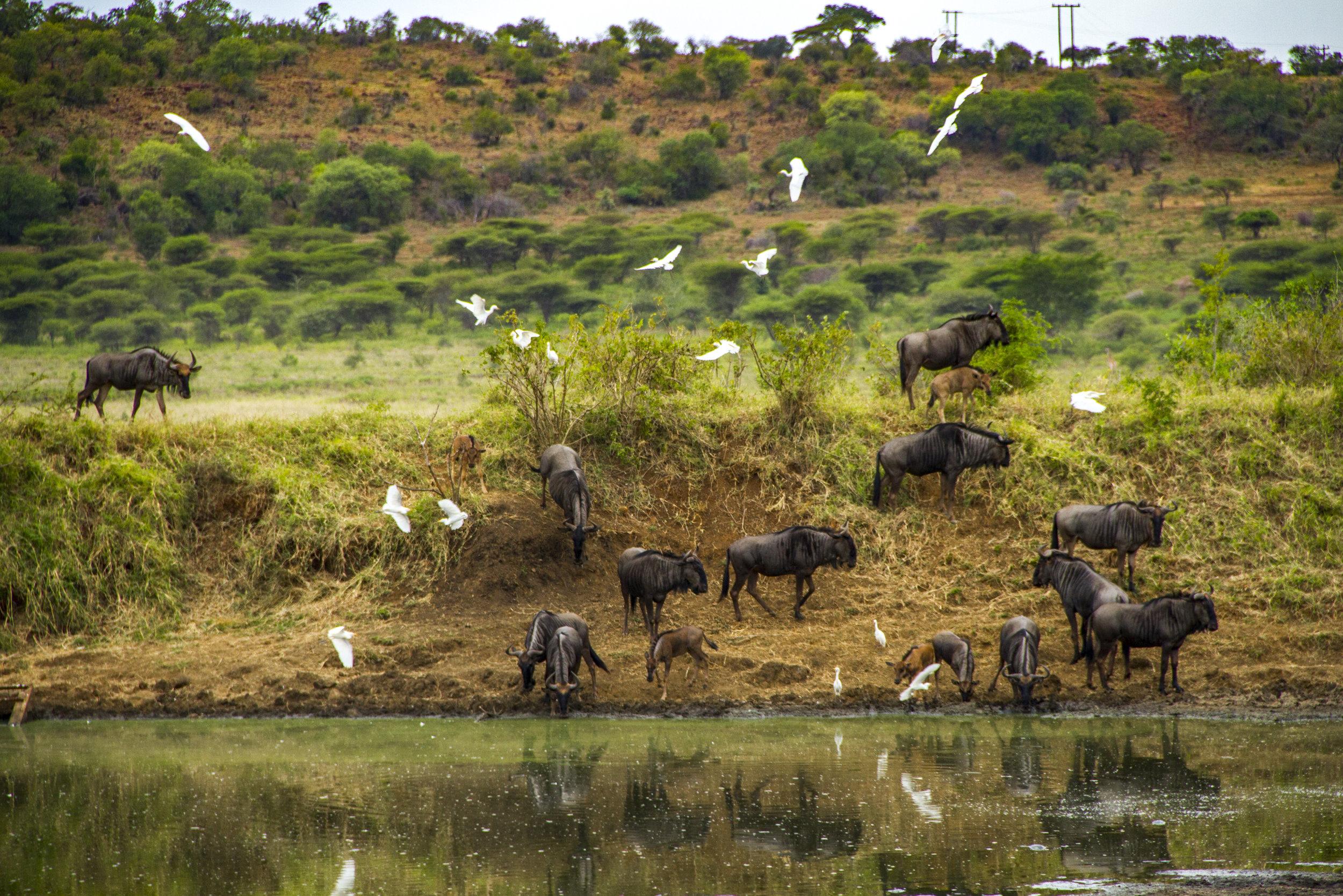 SouthAfrica_sm-3598.jpg