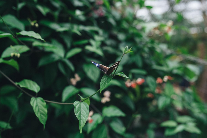 Abbevile Estate Butterfly creek wedding-65.jpg