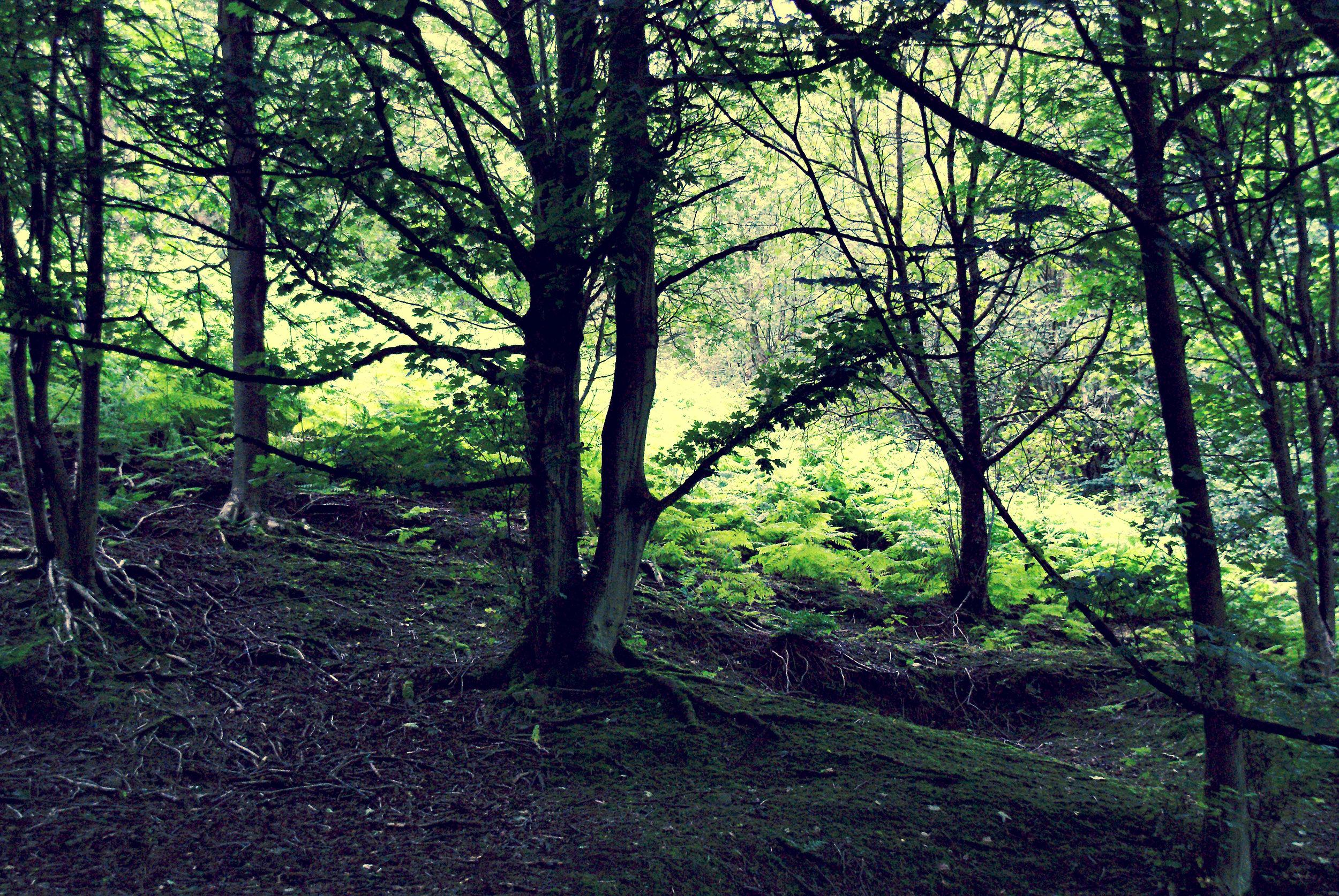 malvern trees.jpg