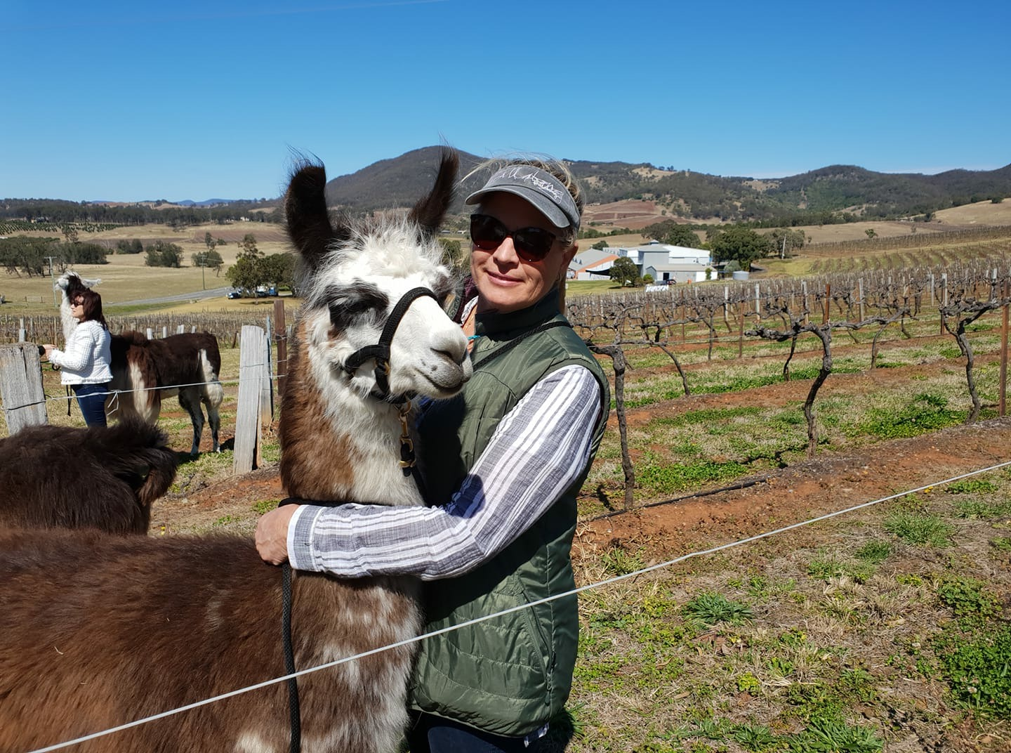 - Enjoy a one hour guided walk through the vineyard, accompanied by one of our friendly llamas - your very own walking companion.