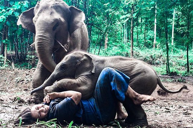 "Don't get trampled by elephants they said... let me be me I replied. • Side note: I won't be posting much during my ""Eat, Pray, Drink & Love Yourself"" adventure but I can't wait to show you everything when I get back! Xo, Mahout (Thai Elephant Trainer) Scilla"
