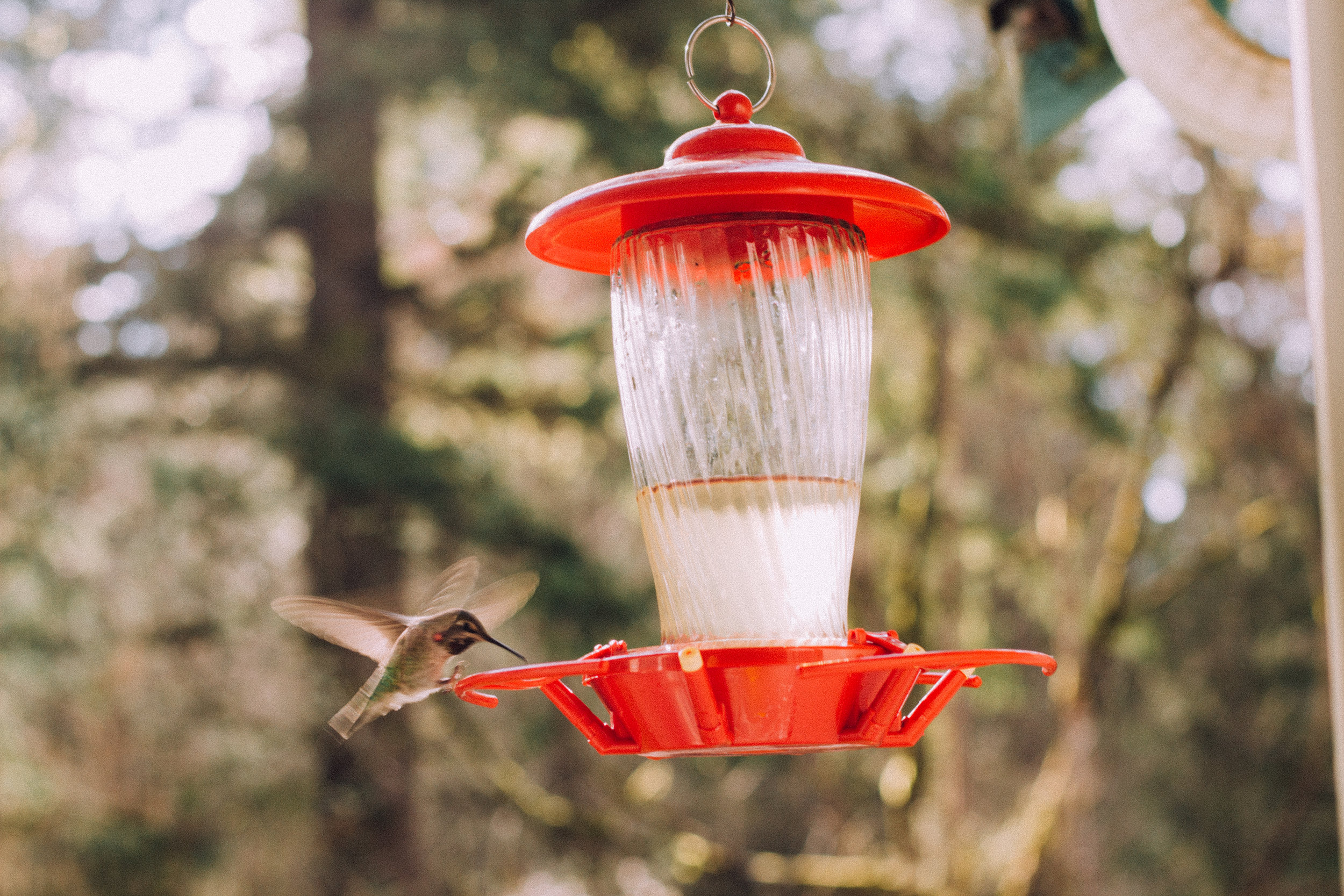 The number of times a hummingbird's wings beat is different from one species to another, and ranges from 720 to 5400 times per minute when hovering.