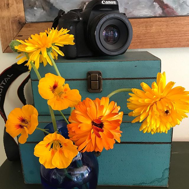 These gorgeous flowers are edible!  I love putting nasturtium in my salads and on my sandwich 😜  Calendula is both medicinal and beautiful 🤗  This pictures a few of my favorite things! My camera, flowers, and these pretty turquoise boxes!  #nasturtium #calendula #herbandflowerfarm