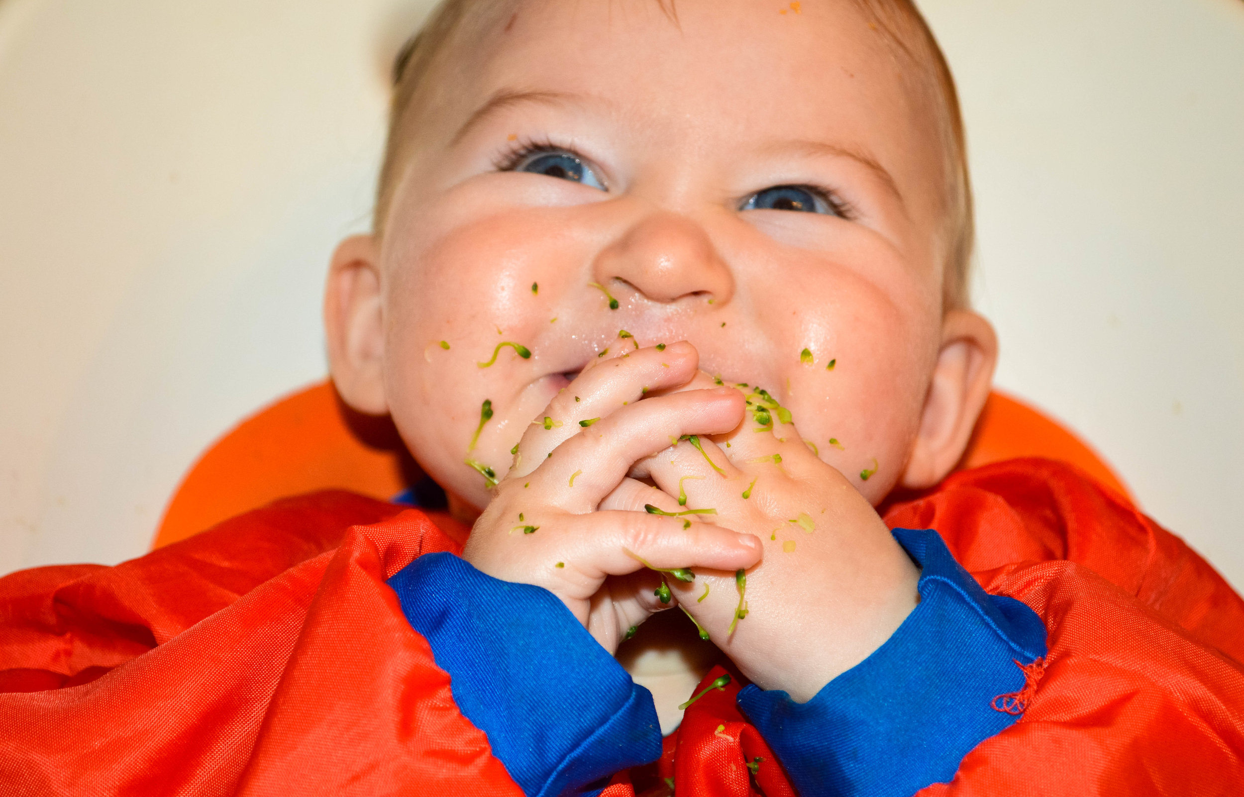 Little Green Lives - Baby-Led weaning