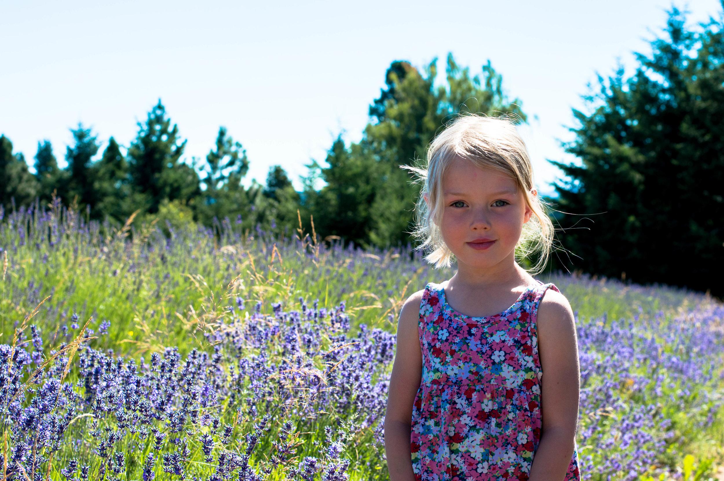lavender 1 (1 of 1).jpg