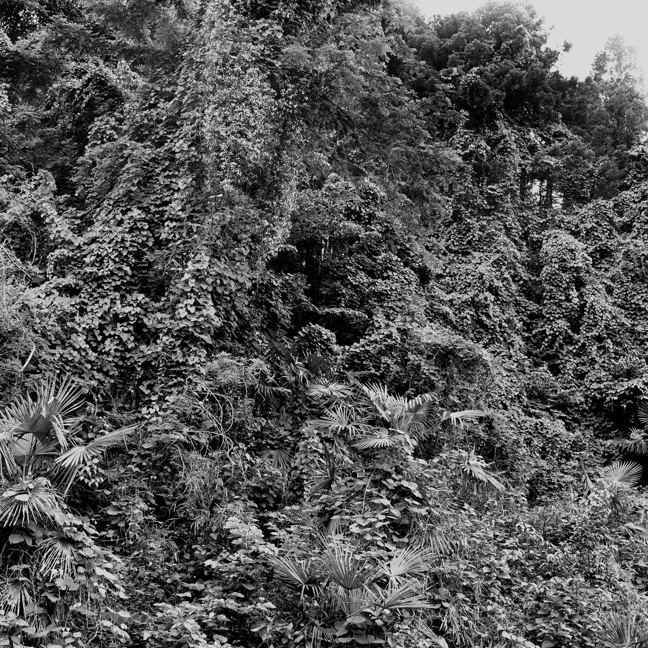 woodland entrance_fix.jpg