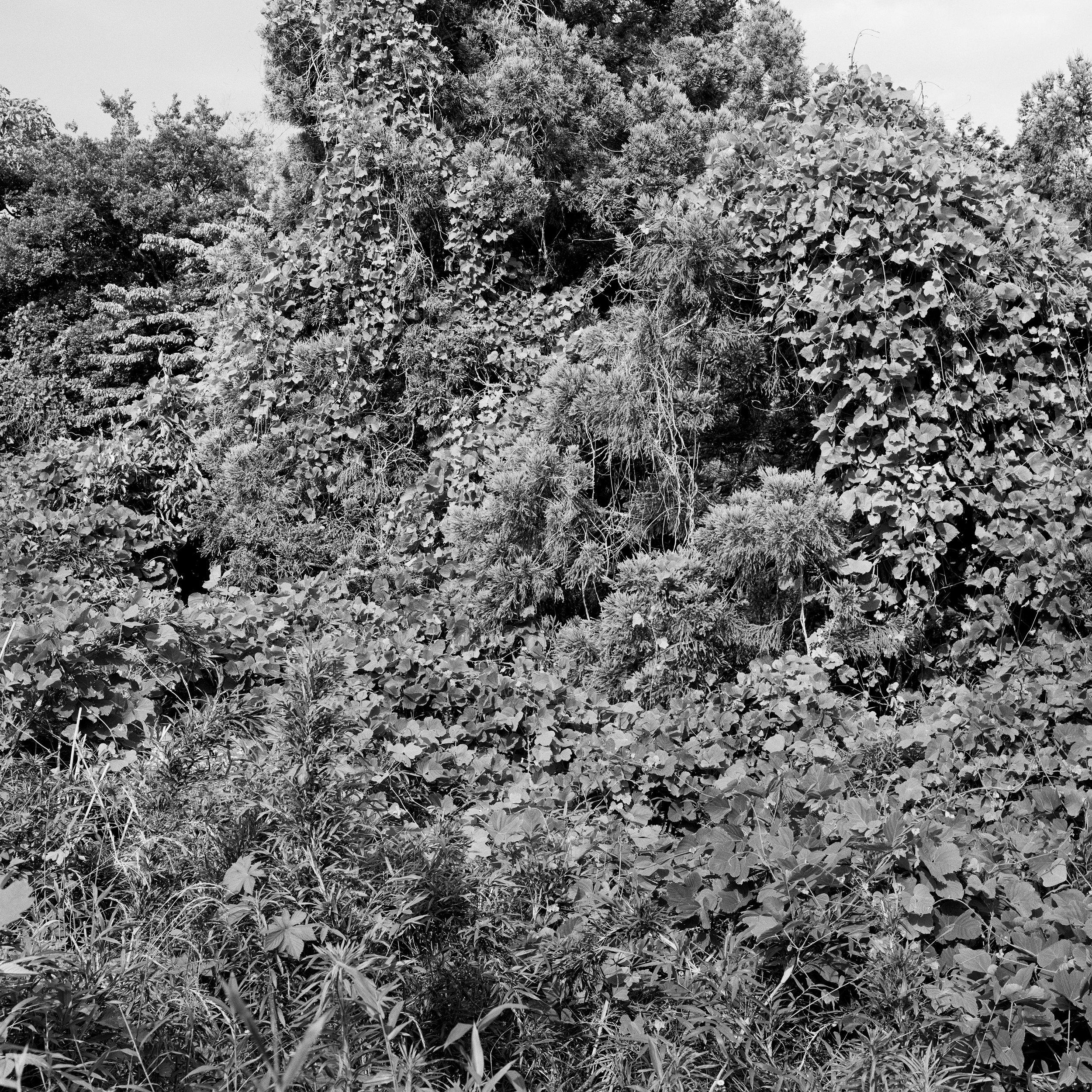 woodland entrance5fix.jpg