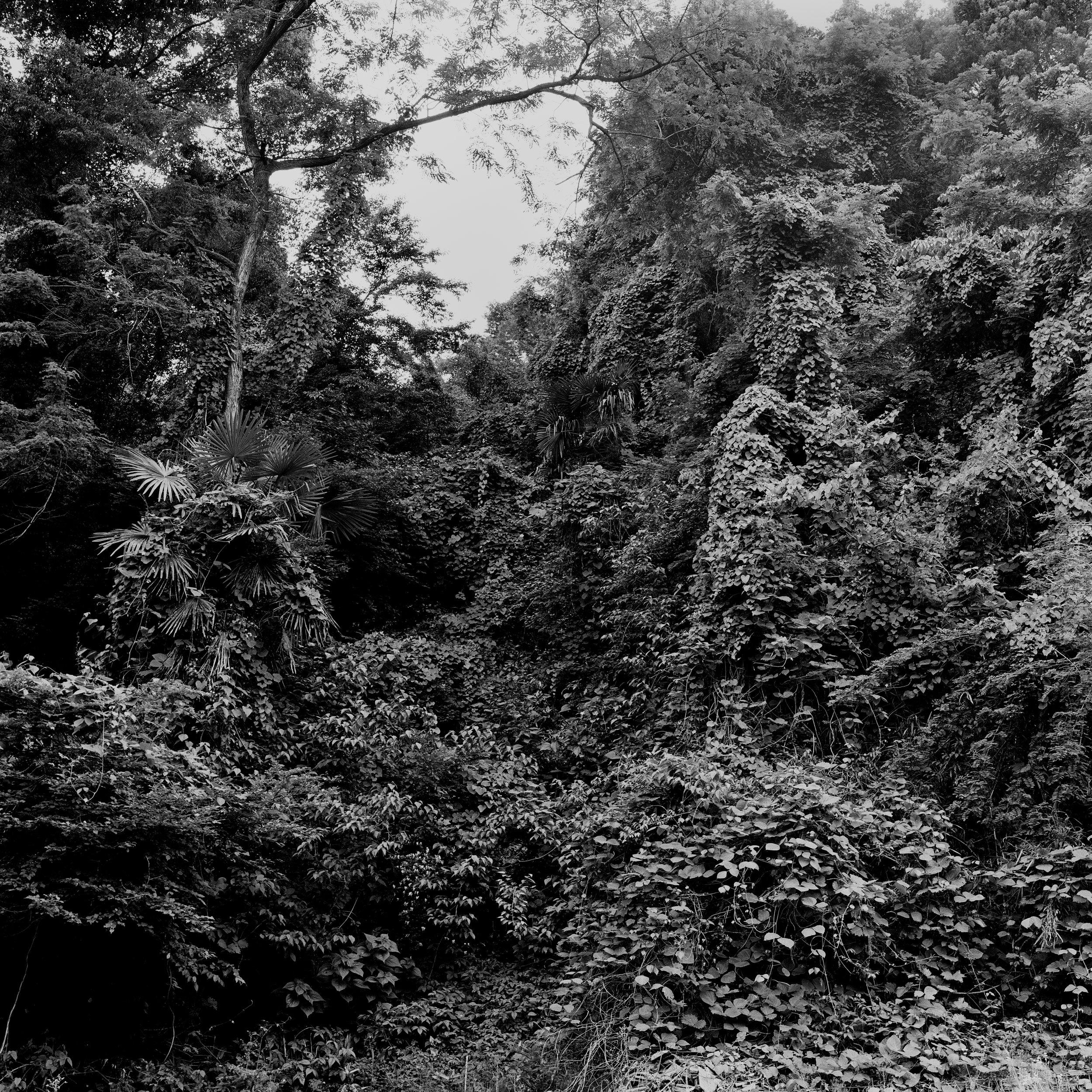 woodland entrance4_fix.jpg
