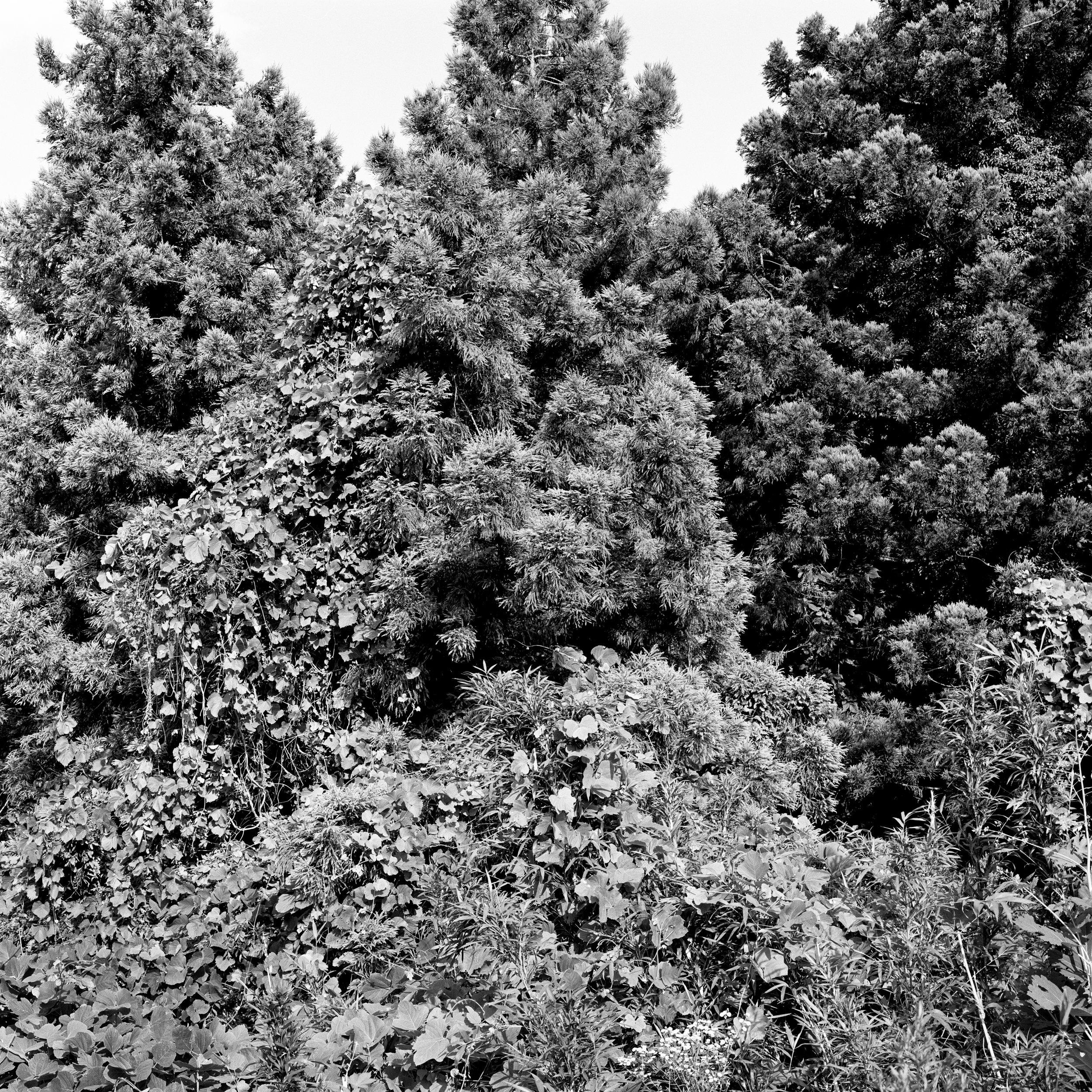 woodland entrance6.jpg