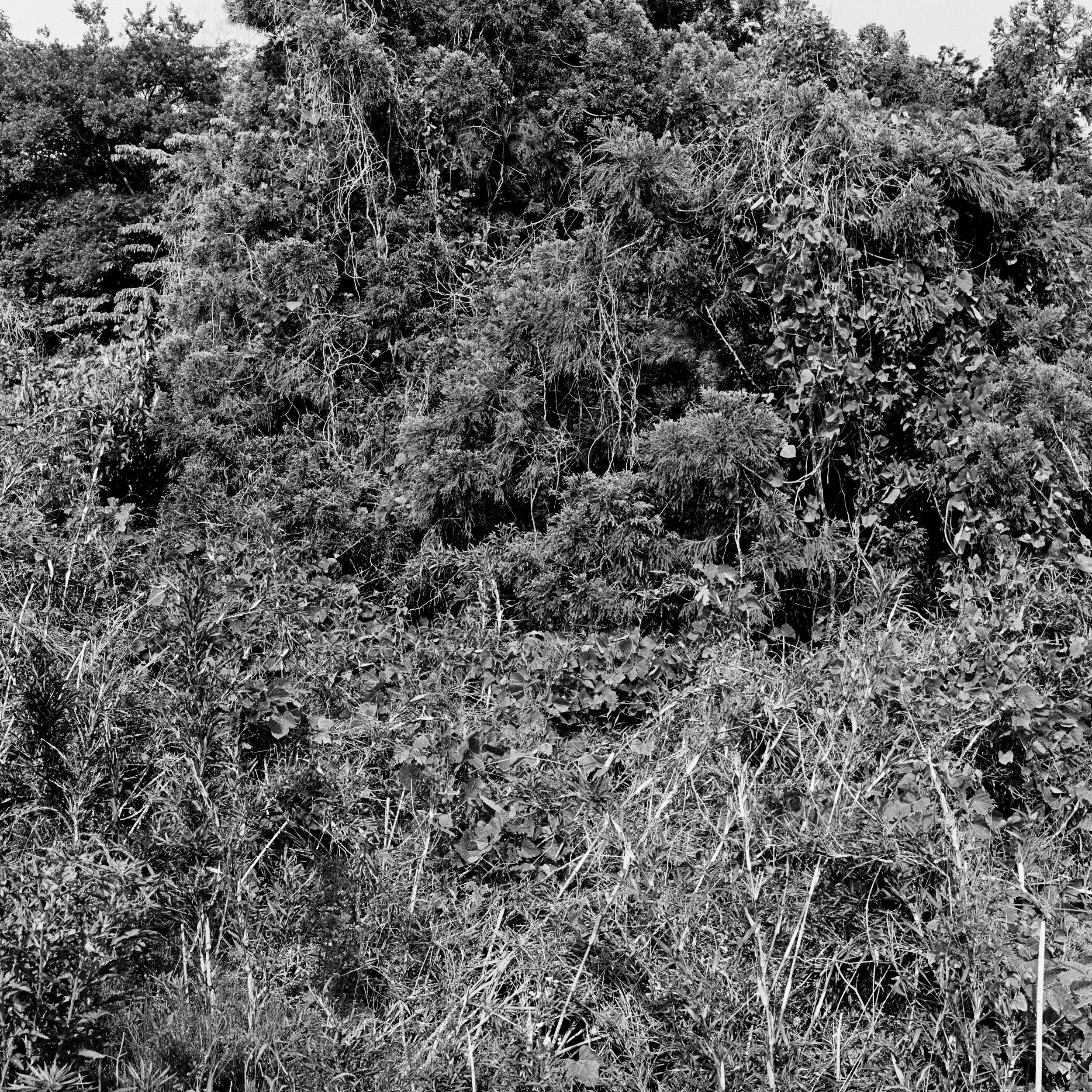 woodland entrance8_composition.jpg