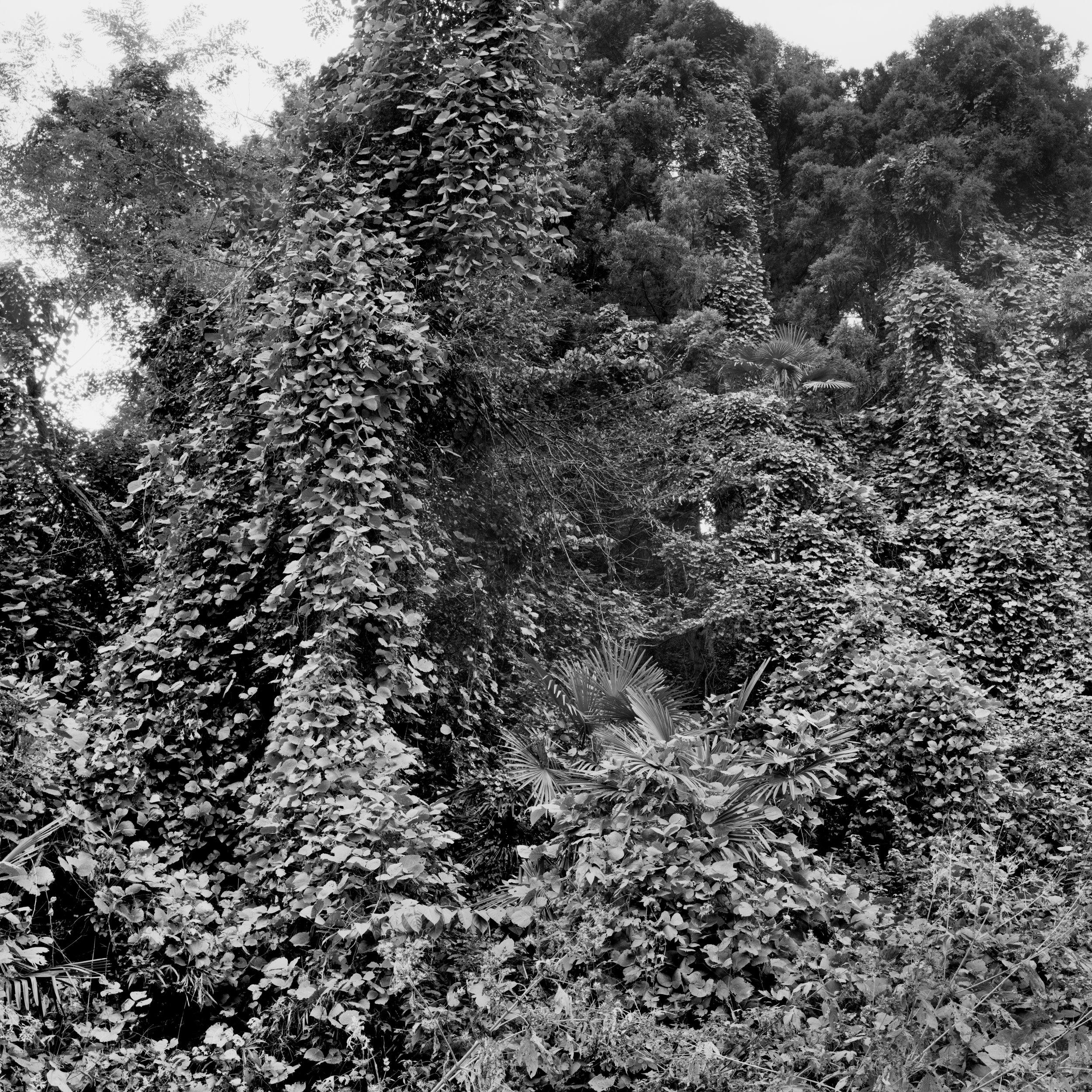 woodland45_004.jpg