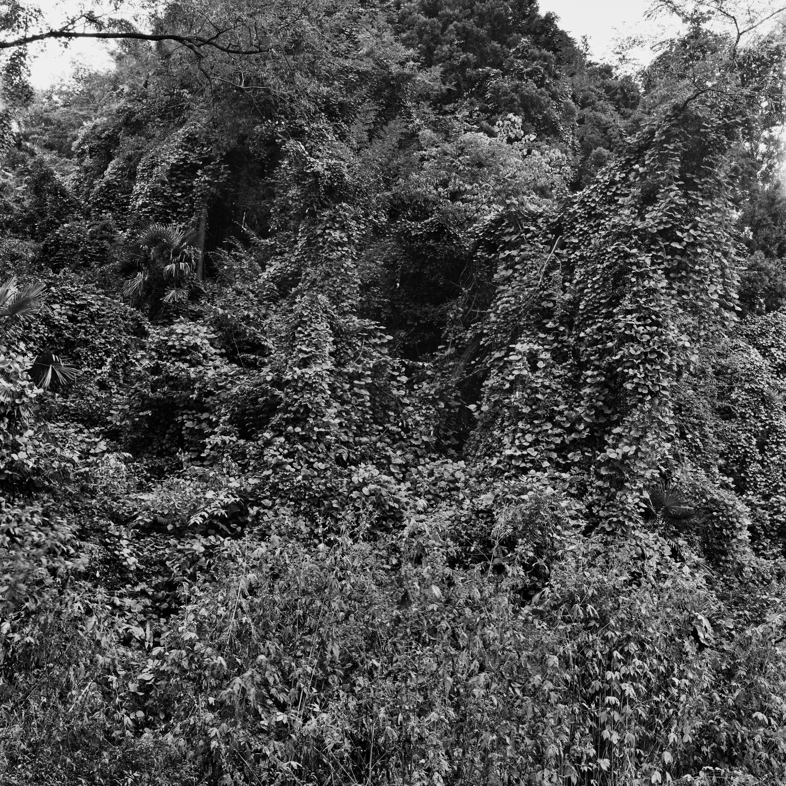 woodland45_005.jpg