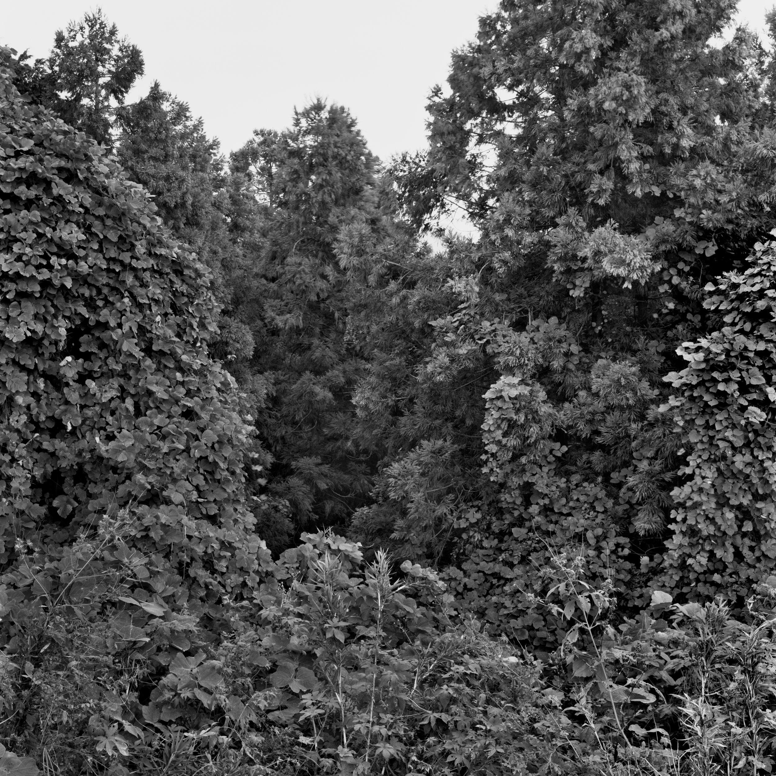 woodland45_007.jpg