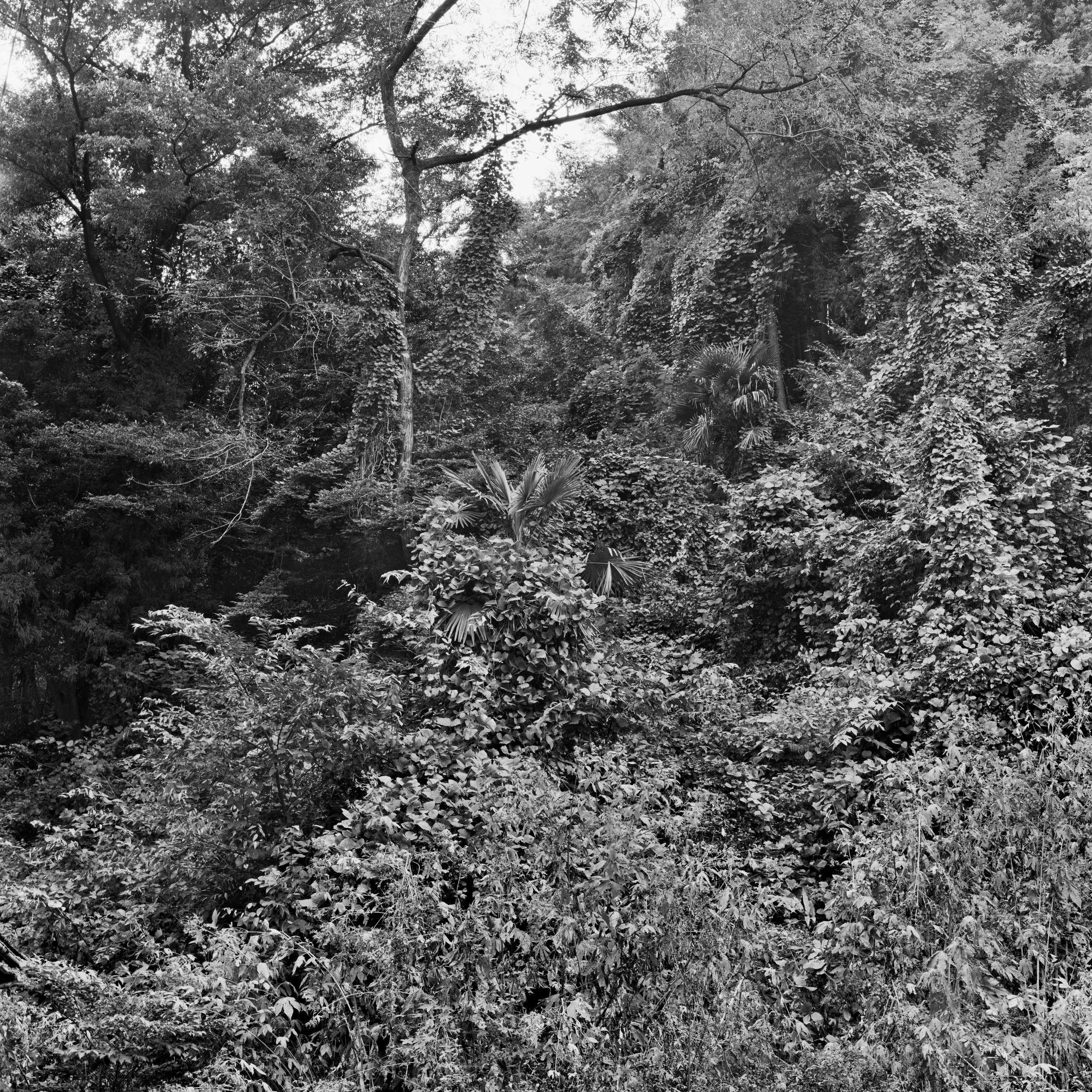 woodland45_011.jpg