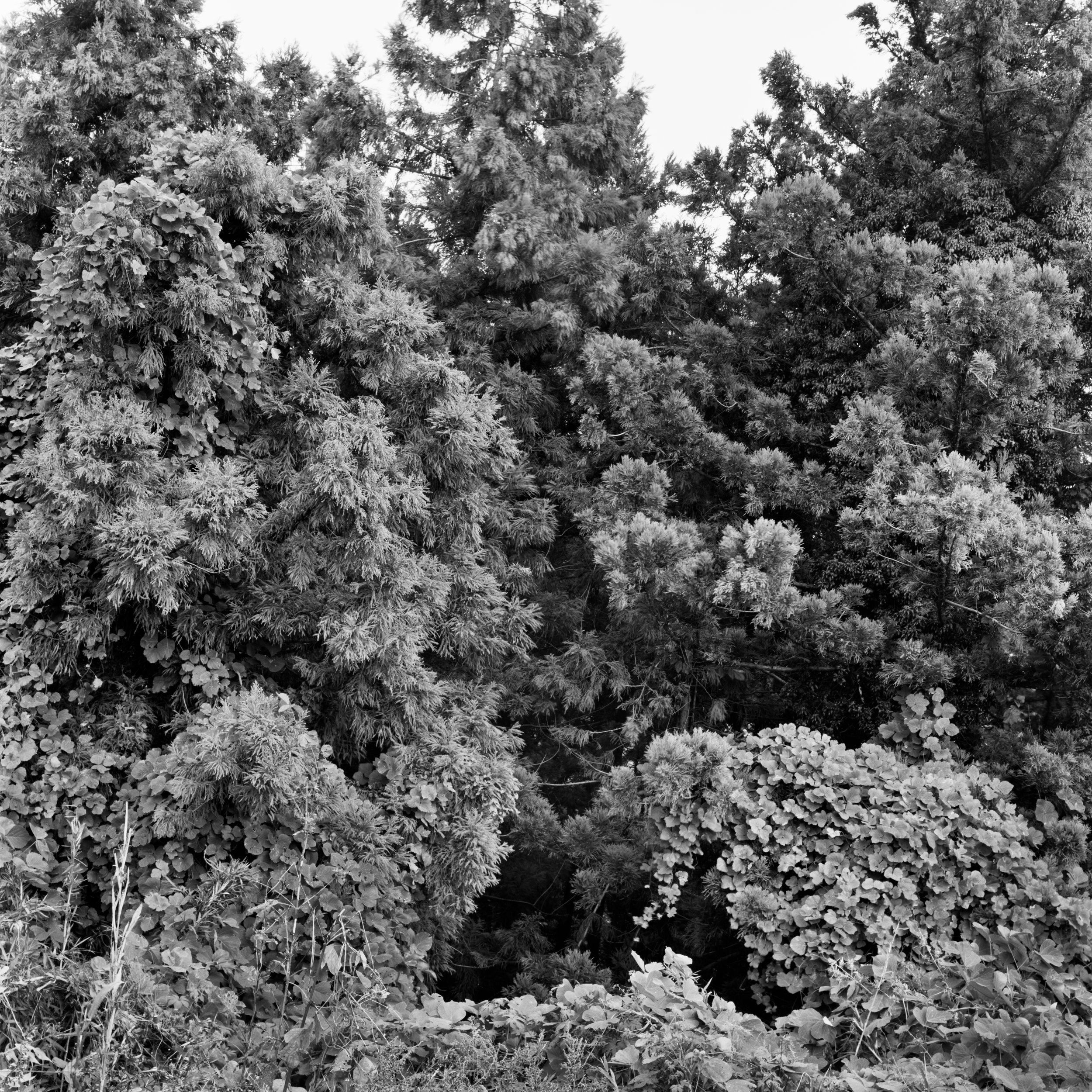 woodland45_018fix.jpg