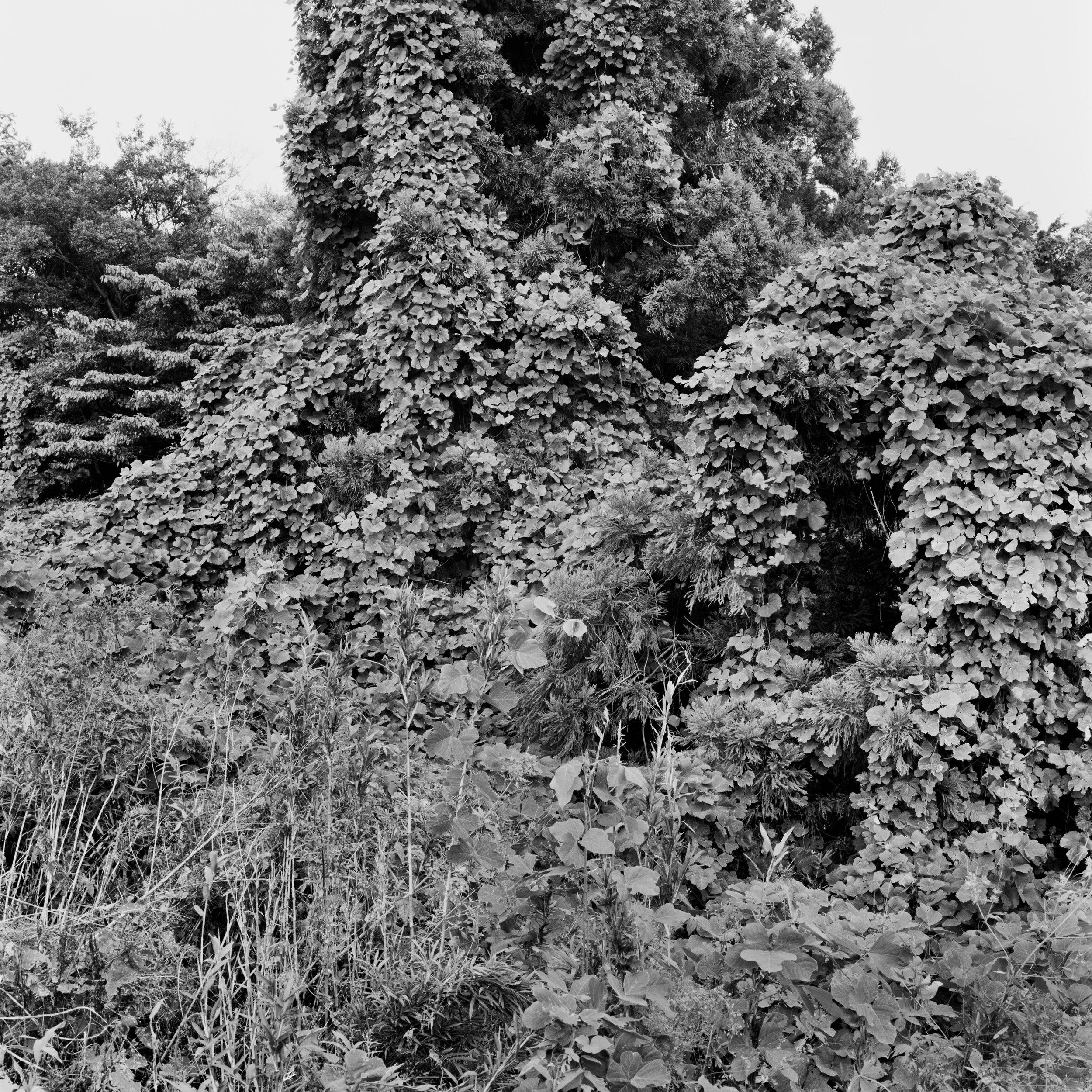 woodland45_026fix.jpg