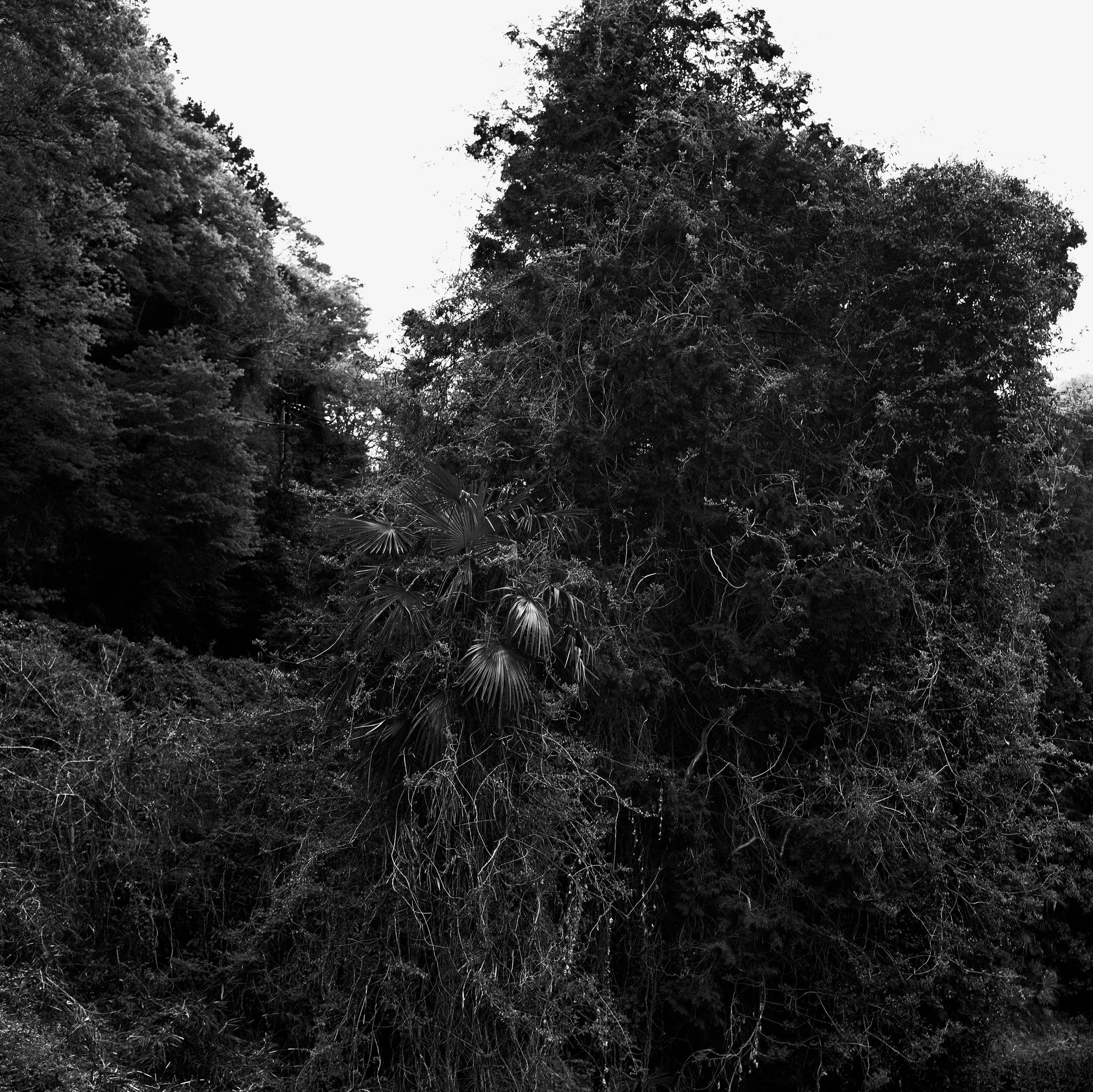 woodland65.jpg