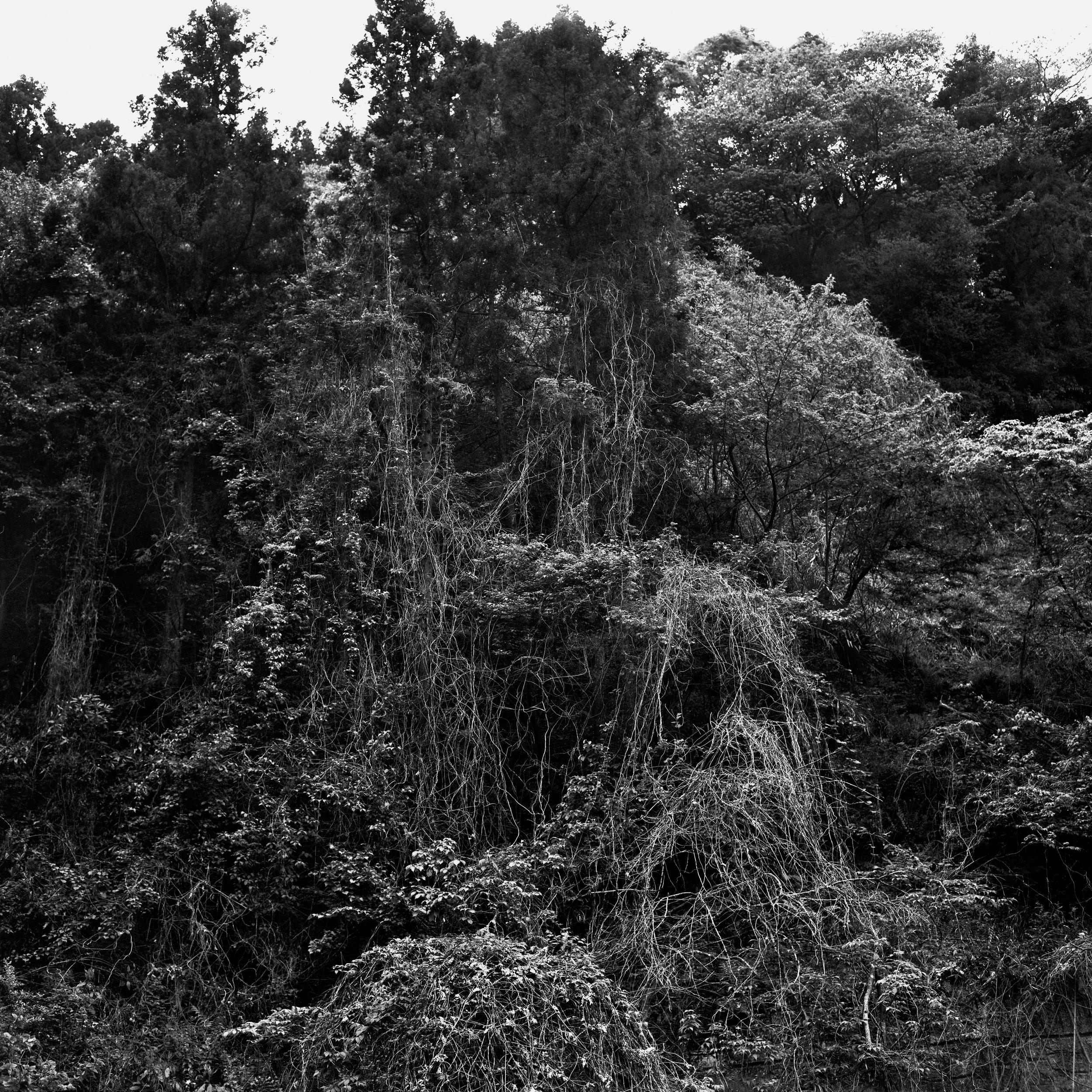 woodland66-2.jpg