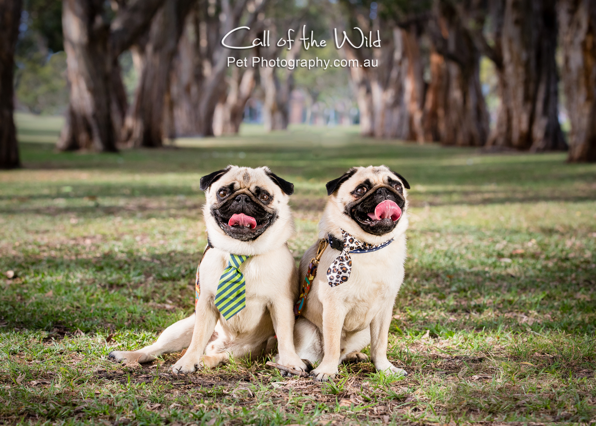 @MrBiscuitthepug the Instagram stars