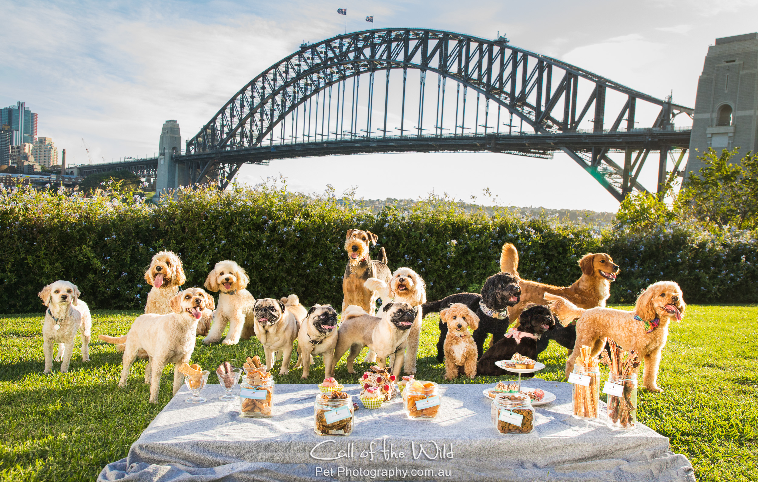 @itsOscardownunder and his paw pals