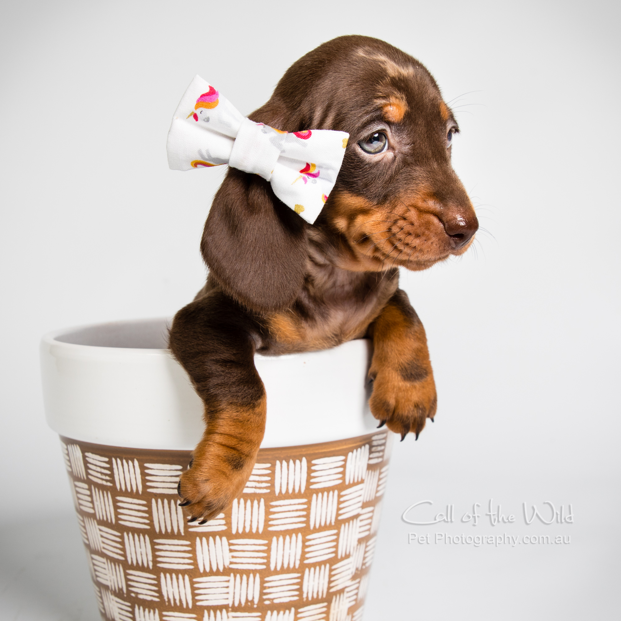Doxie puppies for Dapperdorable - ★★★★★ 4 months agoYet again another superb experience with Annabel! Cannot recommend her enough, and have tried several other photographers too - no-one compares!! Annabel made my vision come to life without needing to go into too much detail, was kind and understanding and made the whole experience so much fun. Love working with her and can't wait to do so again in the future. Her work is BRILLIANT, look no further!! Steph Caruana