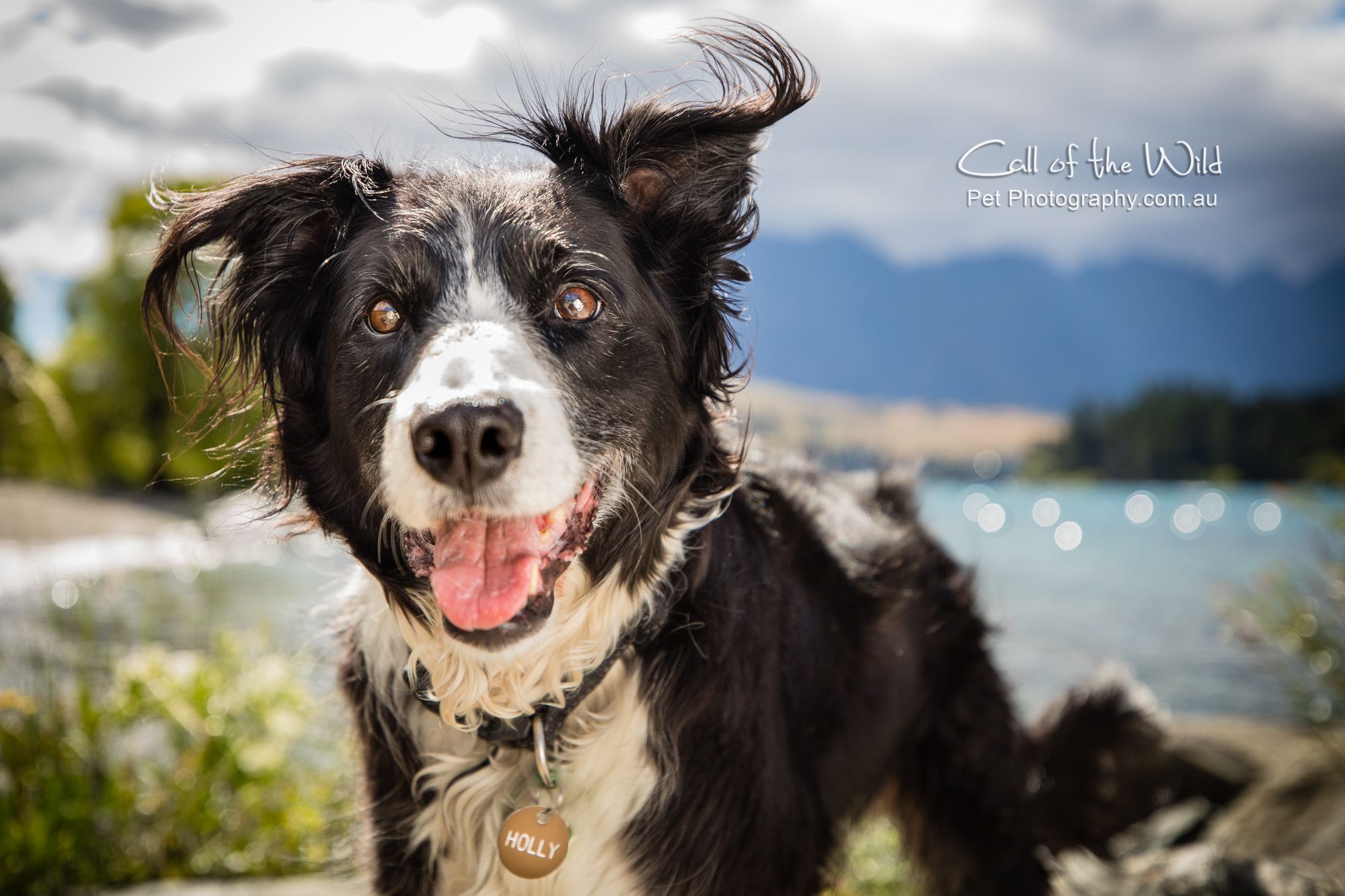 Holly the Border Collie from NZ - ★★★★★ 3 months agoA dedicated professional, in what is a very demanding photography application, that requires that the model mentally understands what is required, without any real comprehension of what is happening. Annabel took great care and time to ensure the
