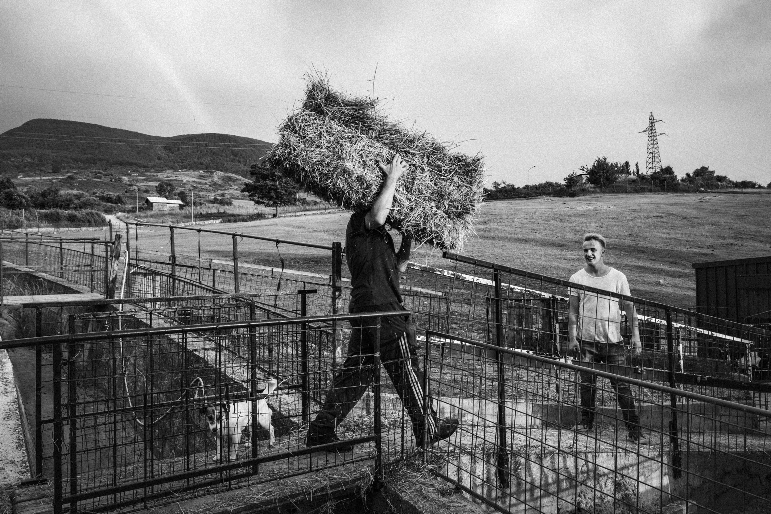 Sant'Angelo del Pesco (IS), Italy - June 2017. In the farm of the Gentile family, summer activities related to securing the provision of hay for winter are going on. In the village, the Gentile family is one of the few who breeds animals.