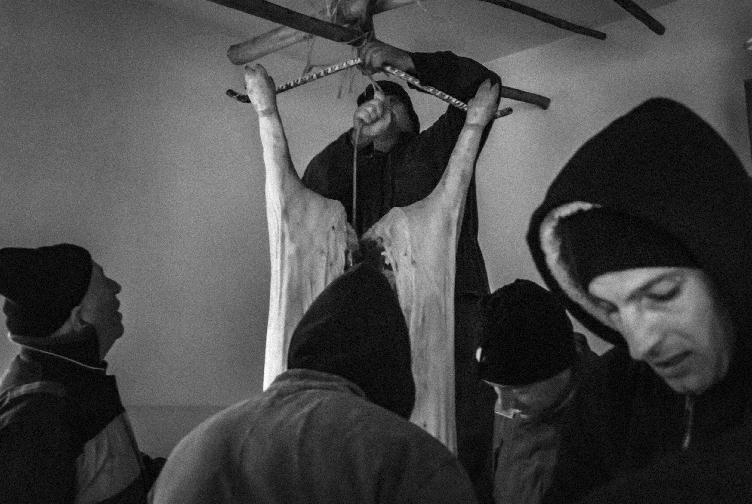 Sant'Angelo del Pesco (IS), Italy - January 2016. contrada Canala. The pig, after being killed with a shot in the head, is brought inside, in a room which allows the meat to get colder, before butchering.