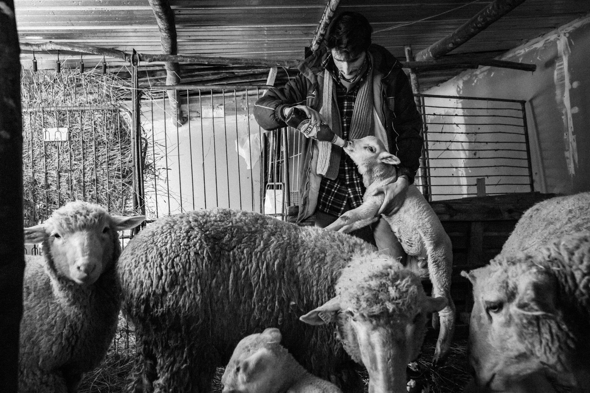 Castel del Giudice (IS), January 2016. Carmine Valentino Mosesso, young student at the agriculture faculty, takes care of a lamb in the family stable. He is one of the few young person which still continue to preserve his roots.