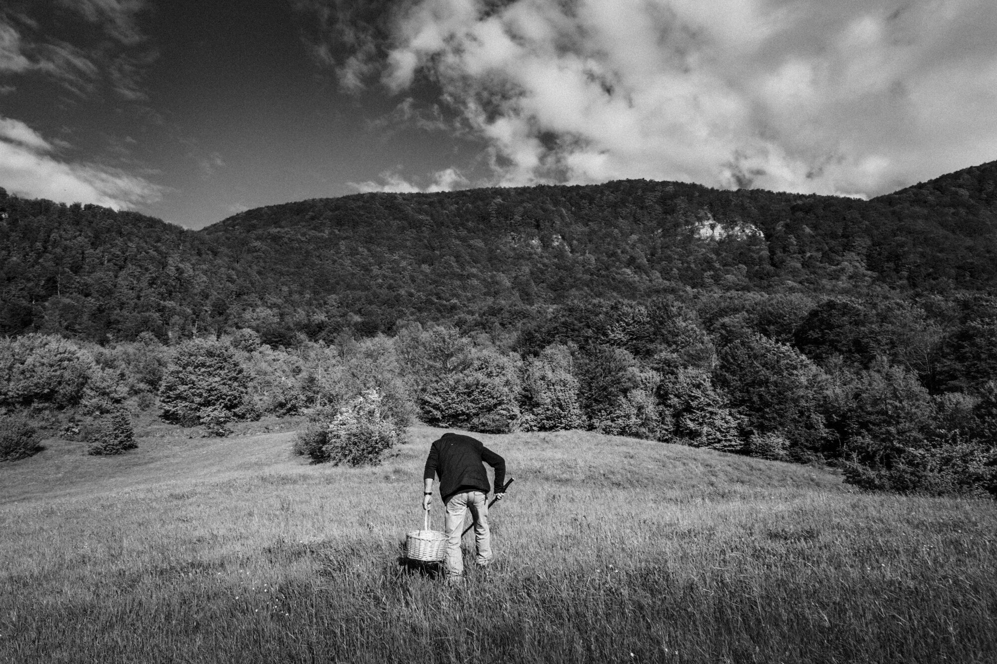Capracotta (IS), May 2016. A local mushrooms hunter during his daily research.