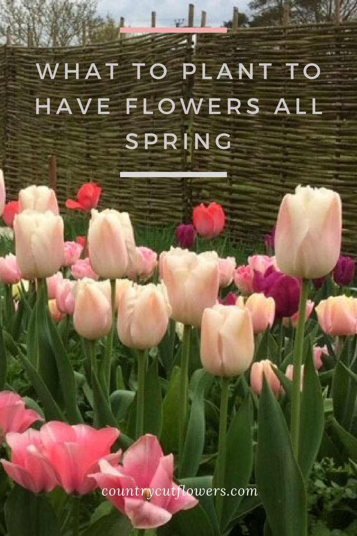 WHAT TO PLANT TO HAVE FLOWERS ALL SPRING (1).png