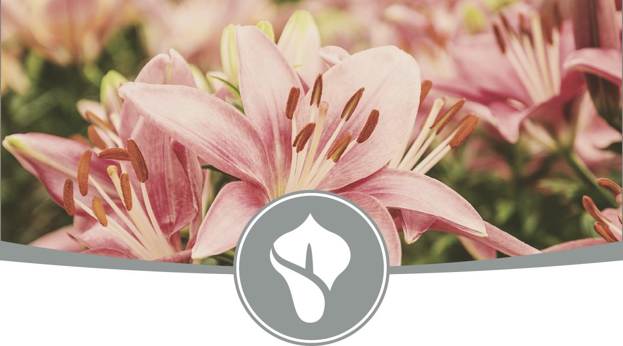 Funerals & Memorials.png