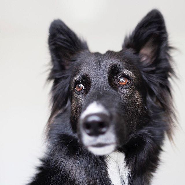 one year with Nera #dogs #dogsofinstagram #dog #dogoftheday #doggy #dogsofinstaworld