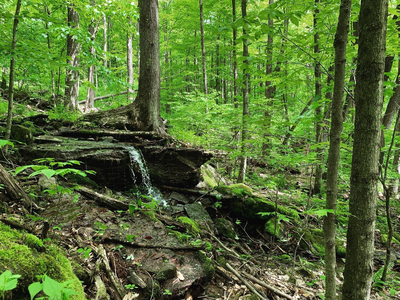 tanbark trail.JPG